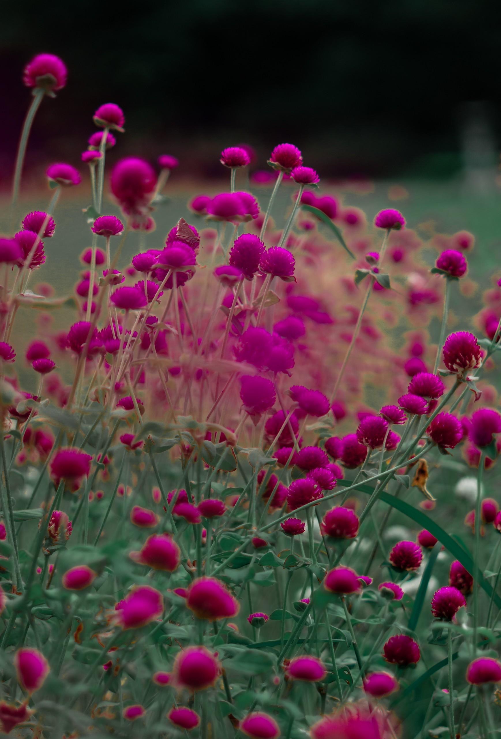 Purple Flowers in Dark Background