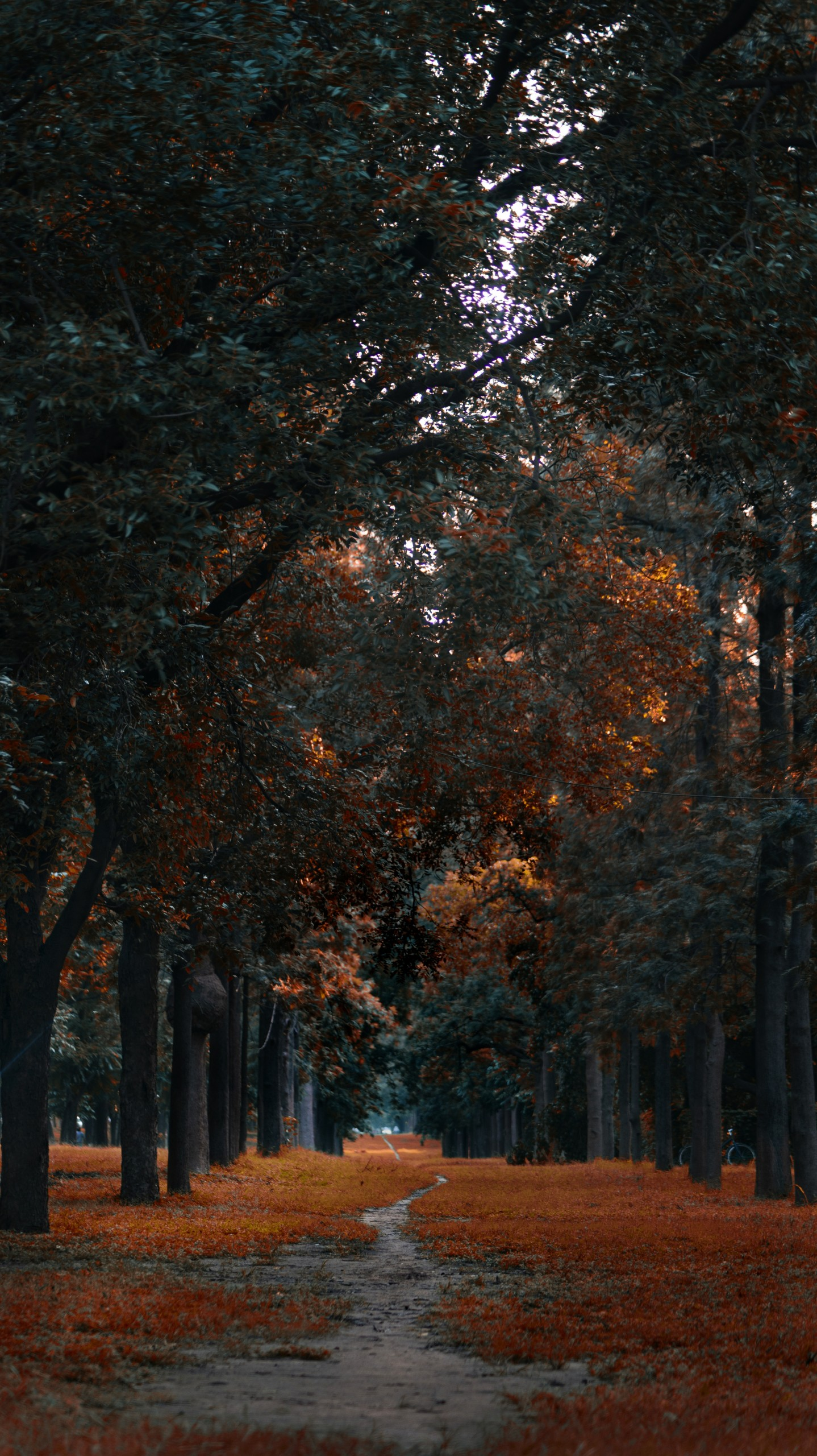 A Forest way