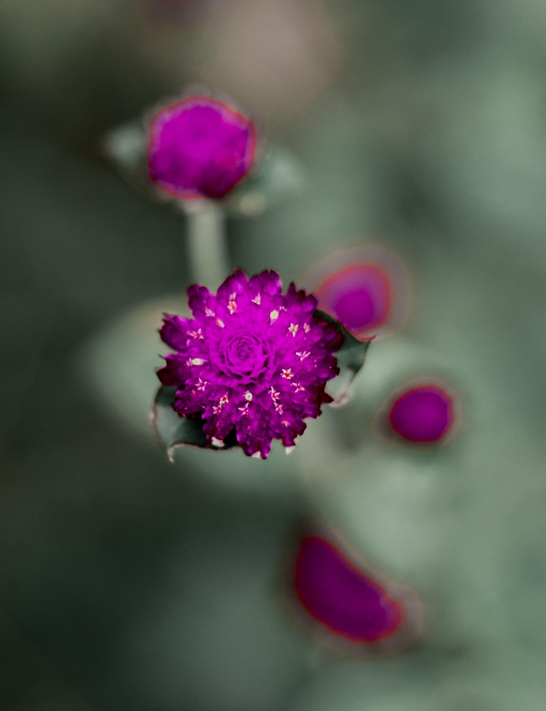 Purple Flower on Grey Background