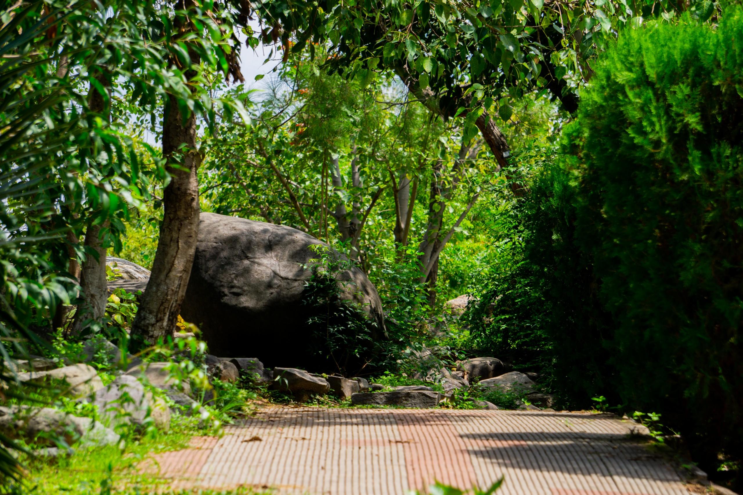 A path in dense greenery