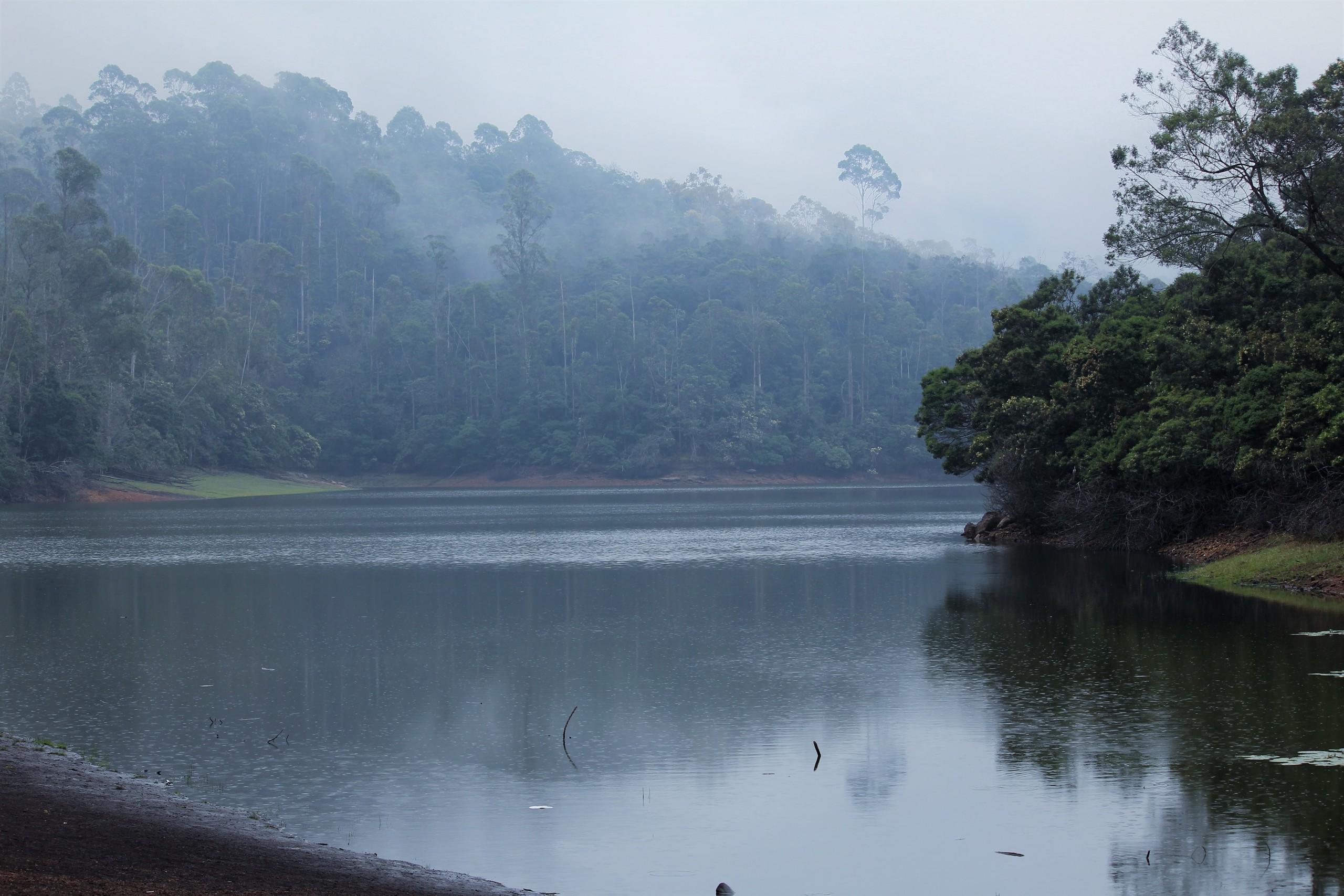 fog at a lake
