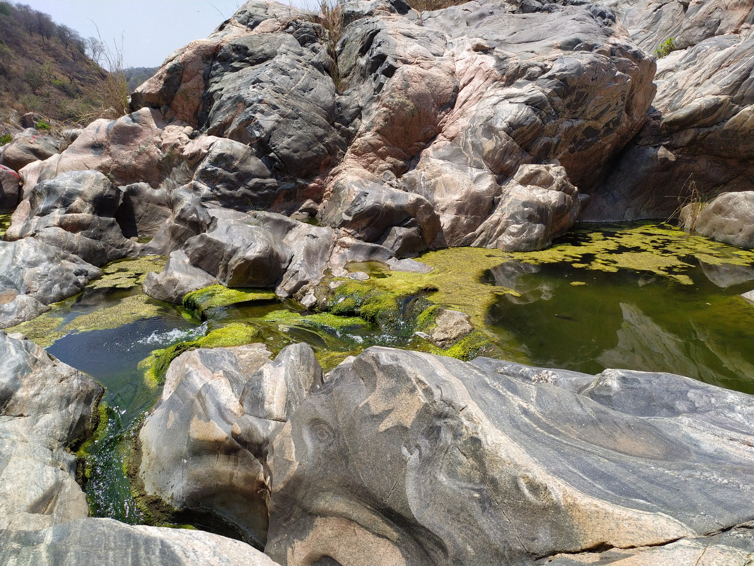 Algae on a stream surrounded with boulders