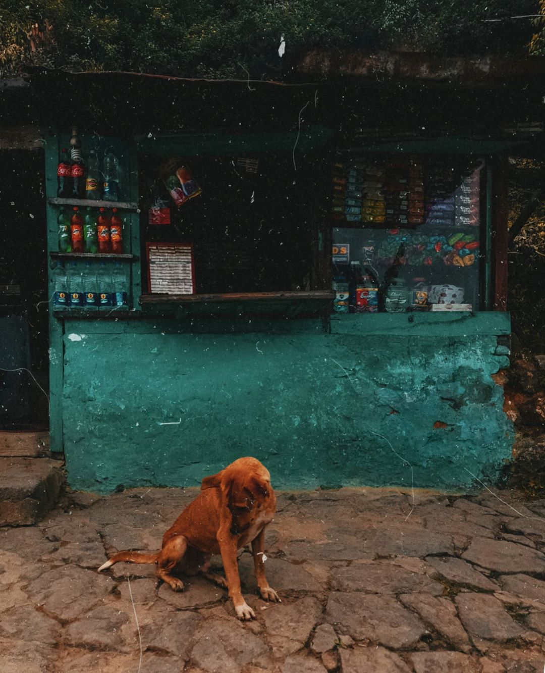 Dog outside a store