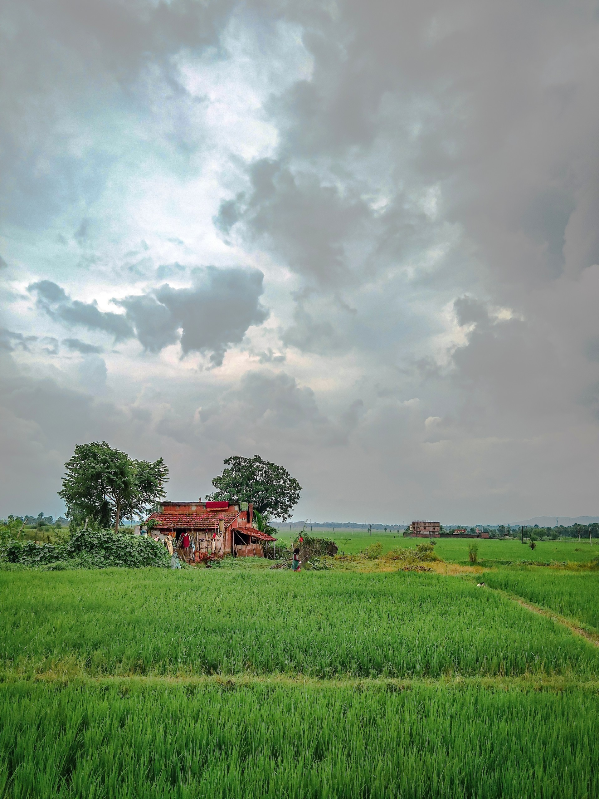 nature, farm, india, farmhouse