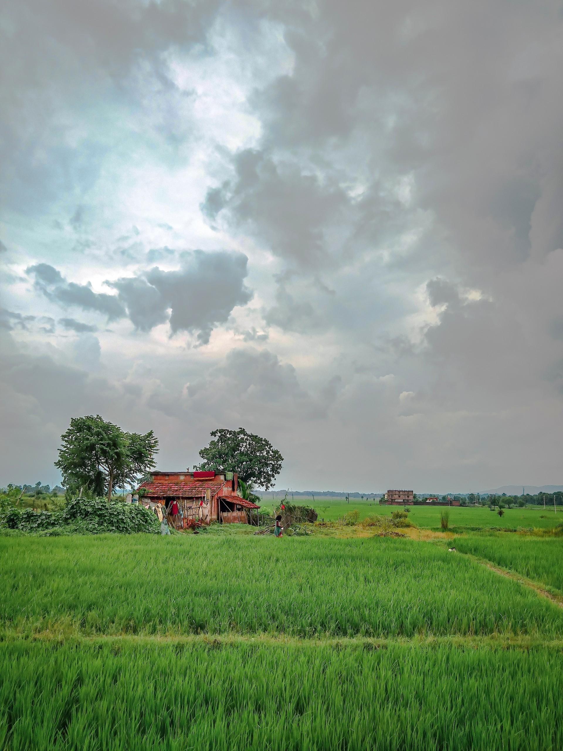 nature, farm, india, farmhouse