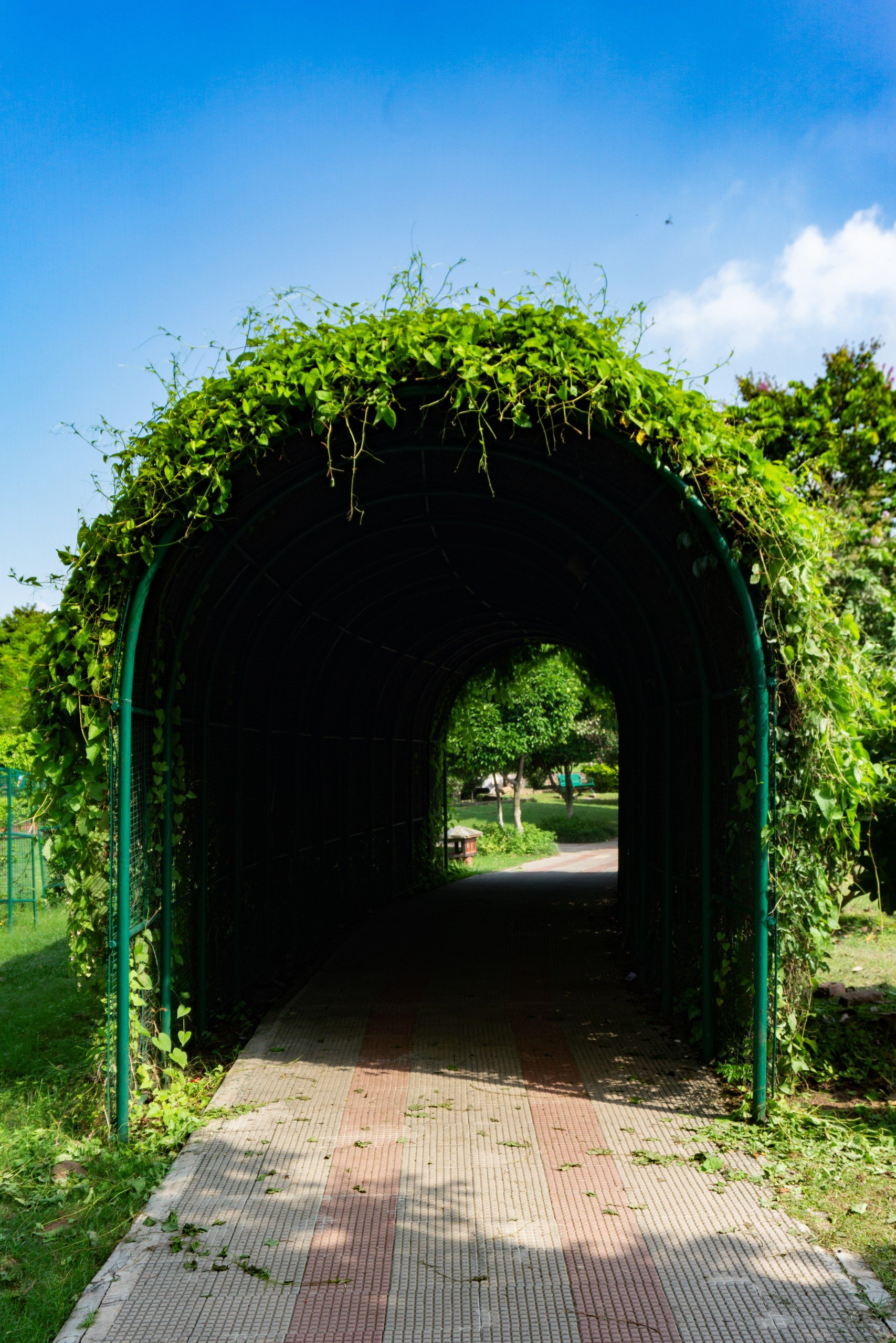 Arch Trail of Plants