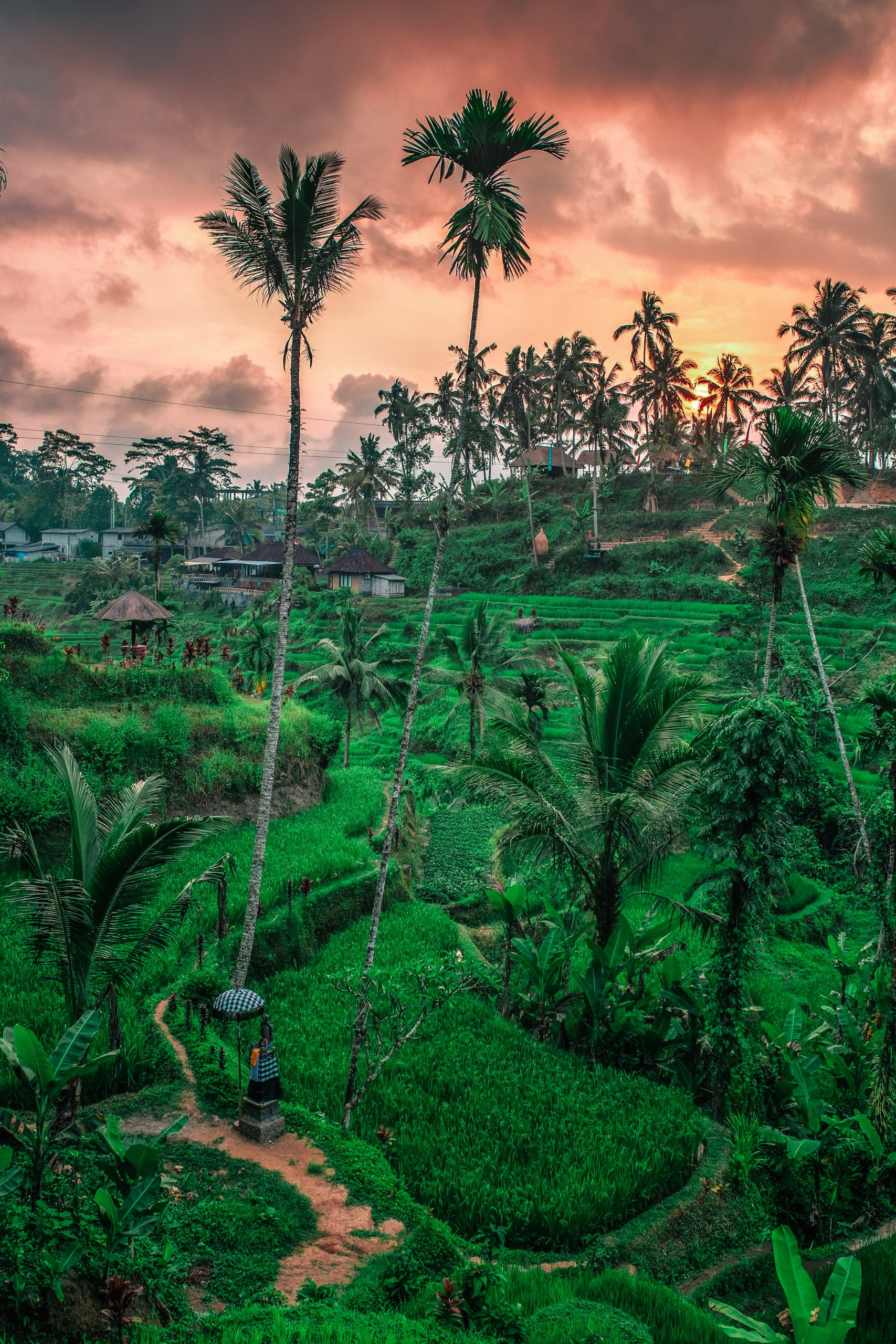 Balinese Rice Fields in Indinesia