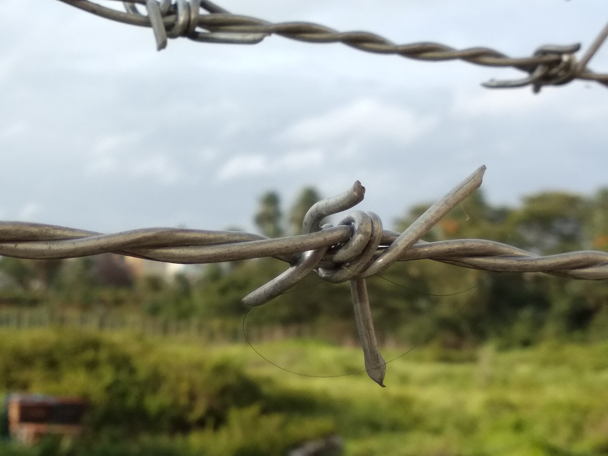 Barbed wires in a jungle