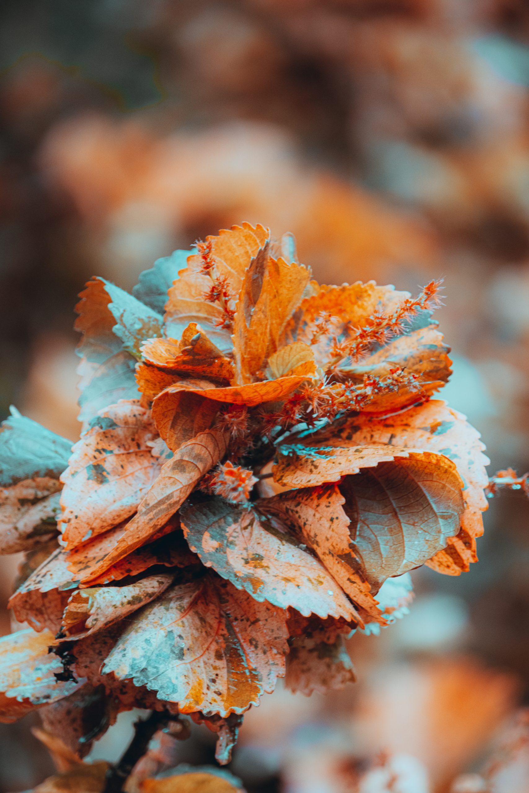 Beautiful Orange plant