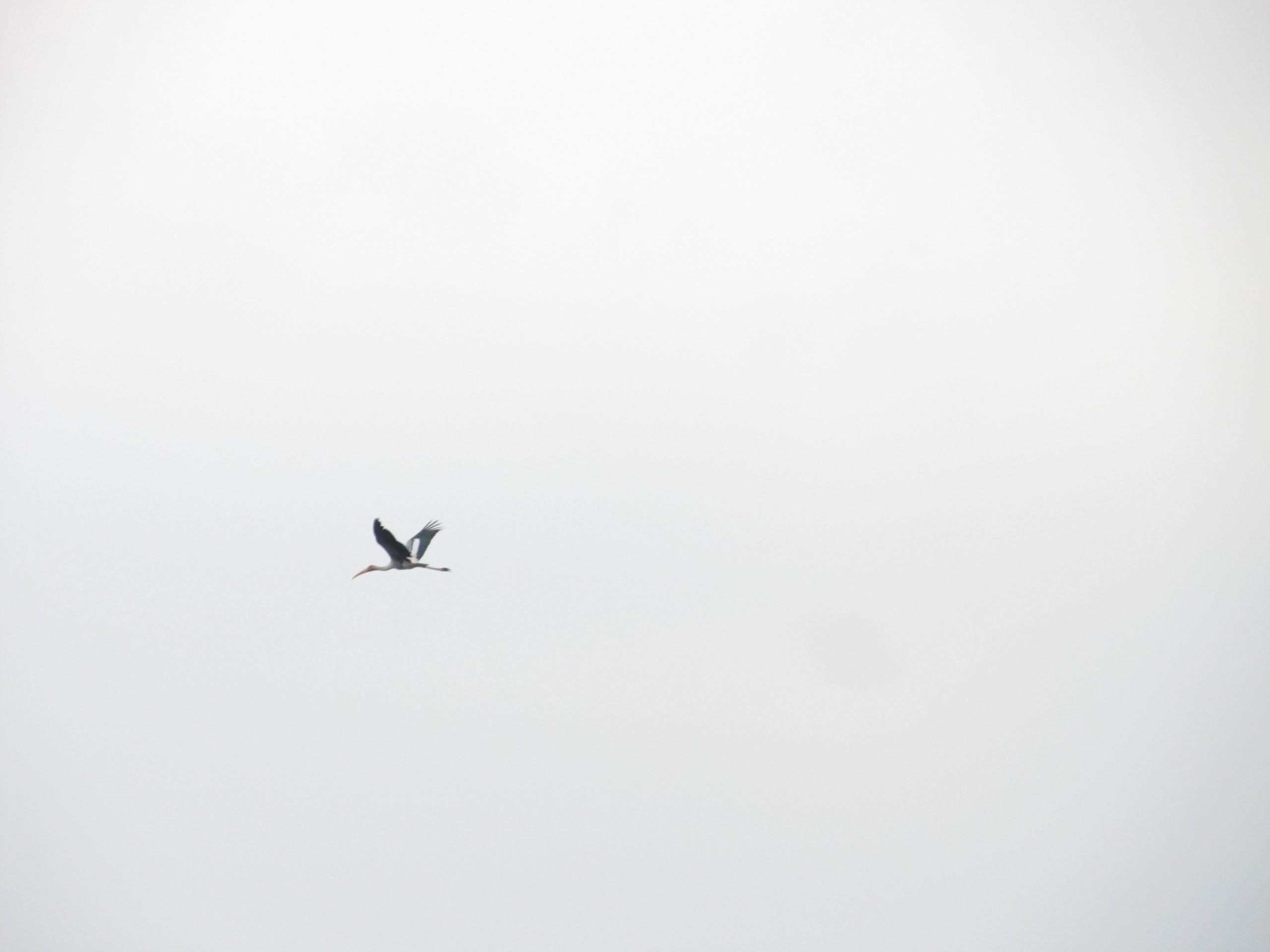 Bird Flight on the Sky