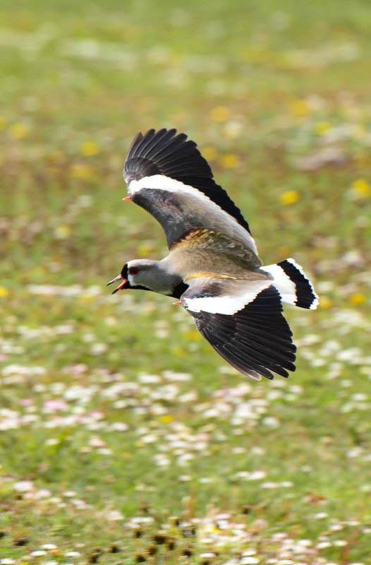 Bird Flying on Landscape