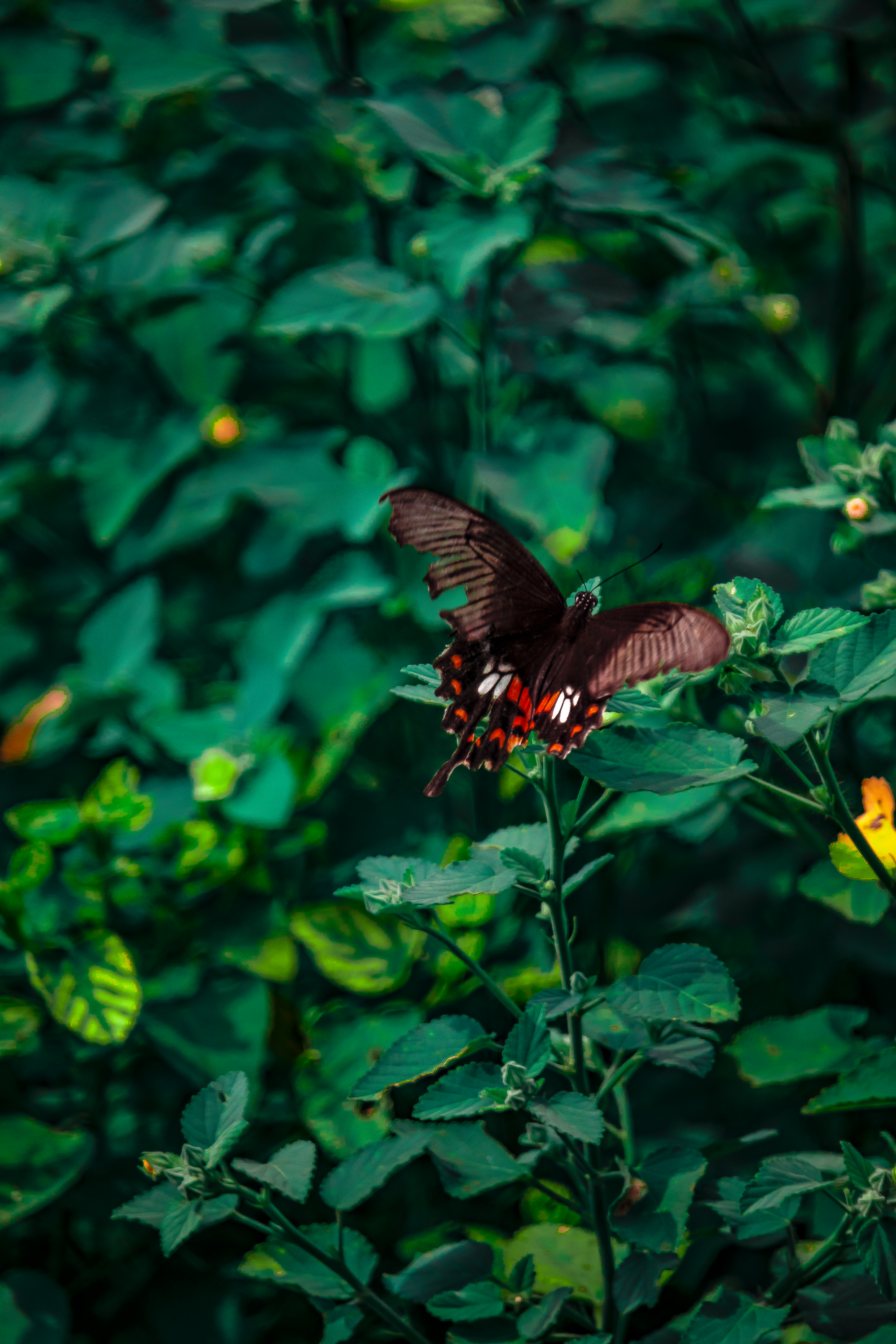 black butterfly on a plant