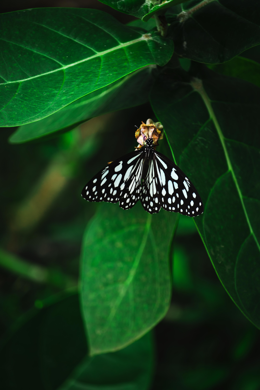 A butterfly closeup