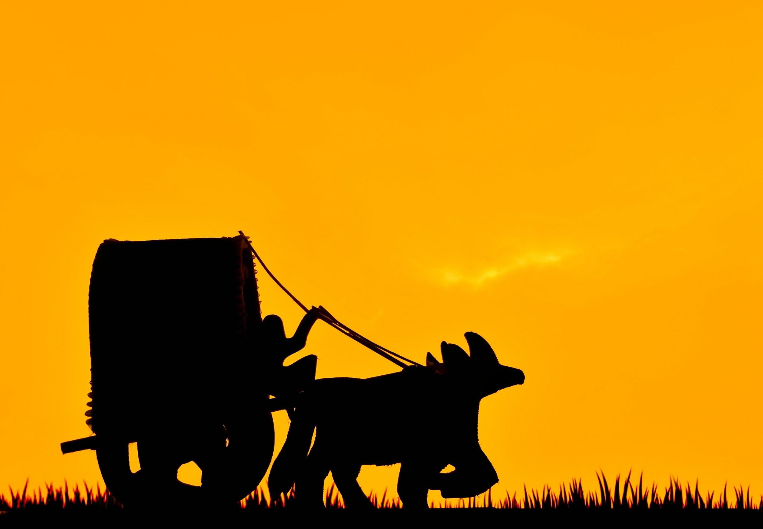 Bullock cart silhouette