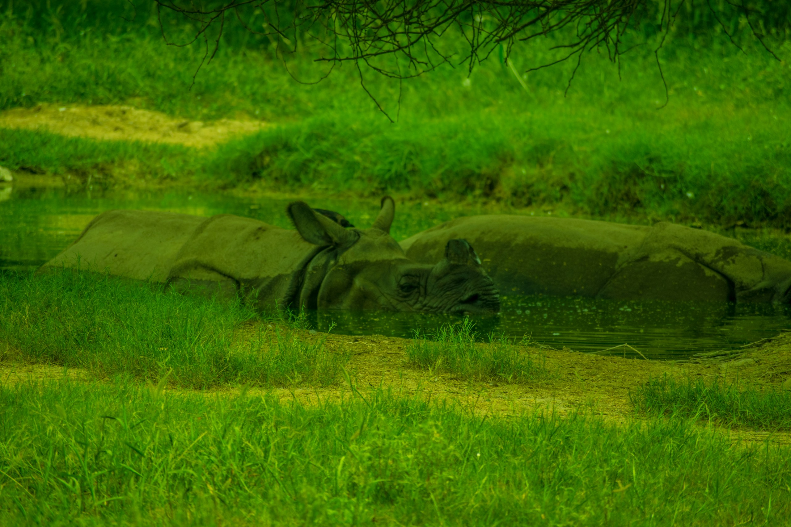 Camouflaged Rhinoceros