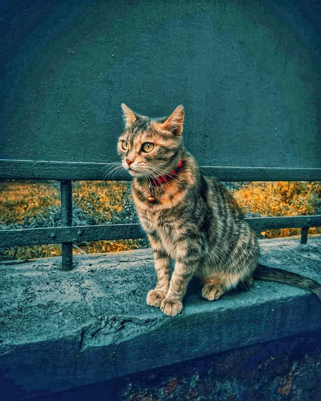 Cat 🐈 night