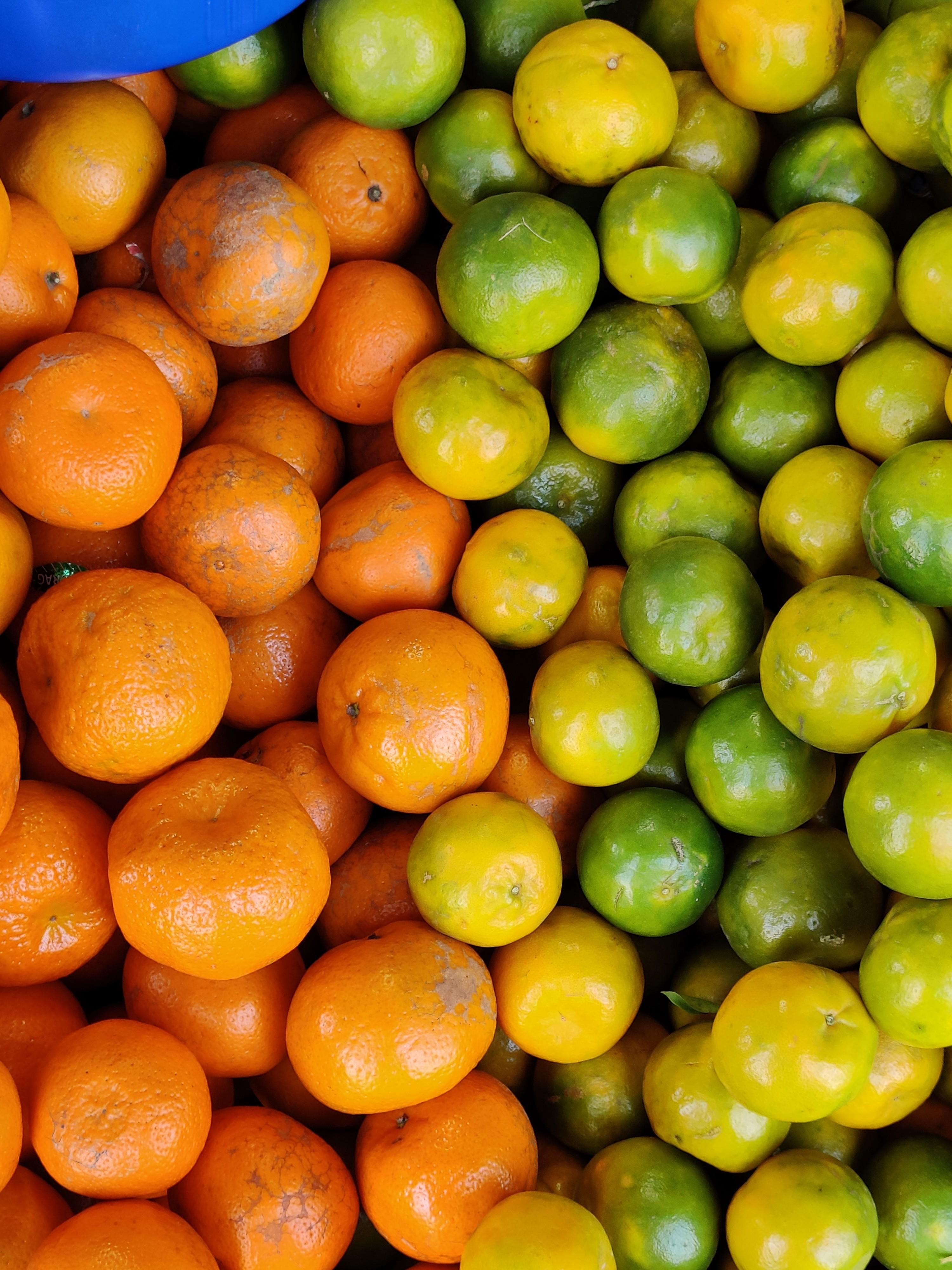 Citrus Fruits – Orange & Mousambi
