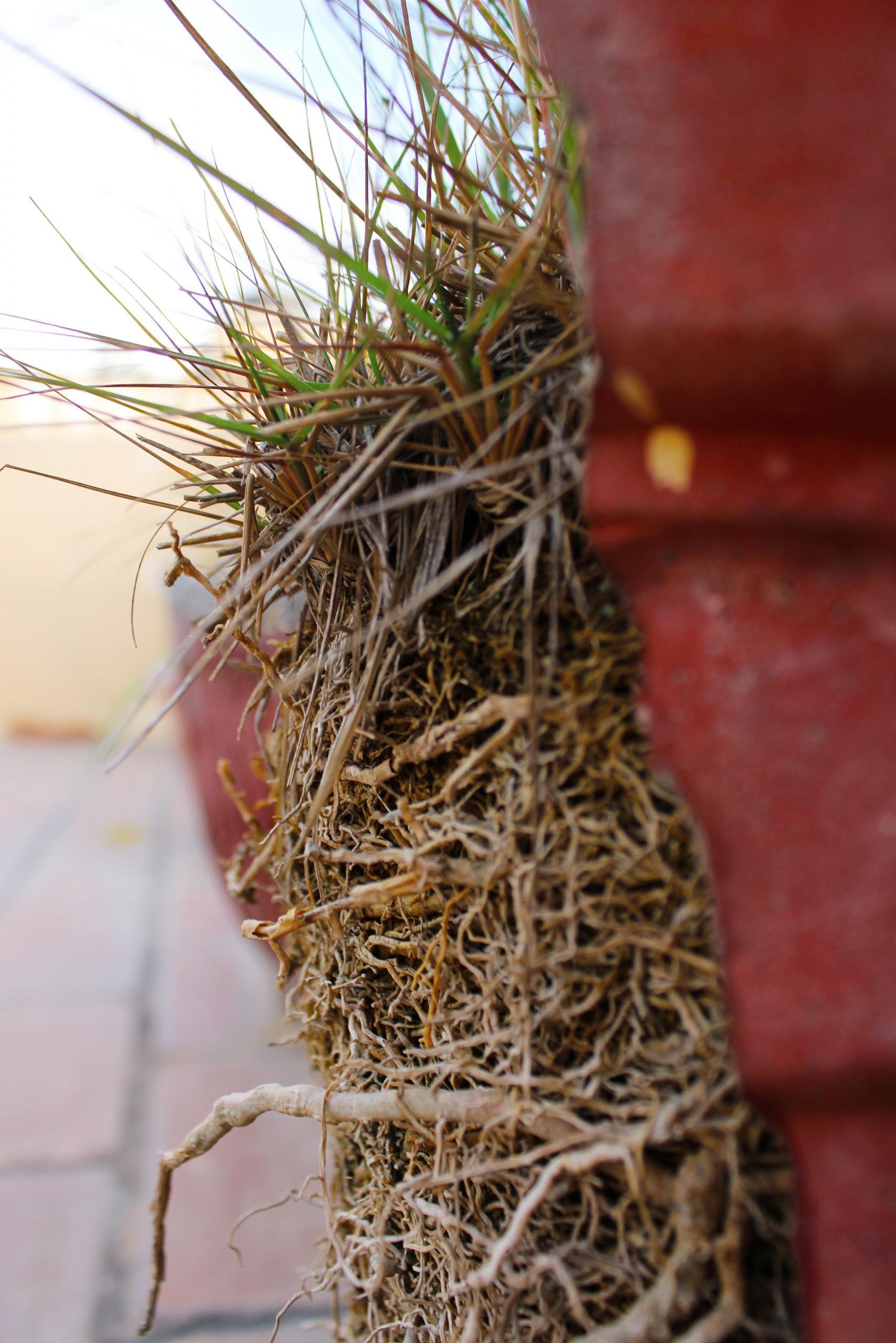 Close-up of a Broken pot