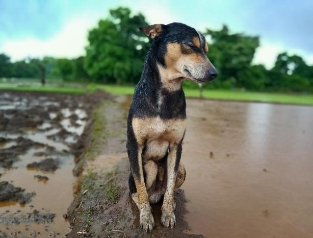 Cute Dog in the Field