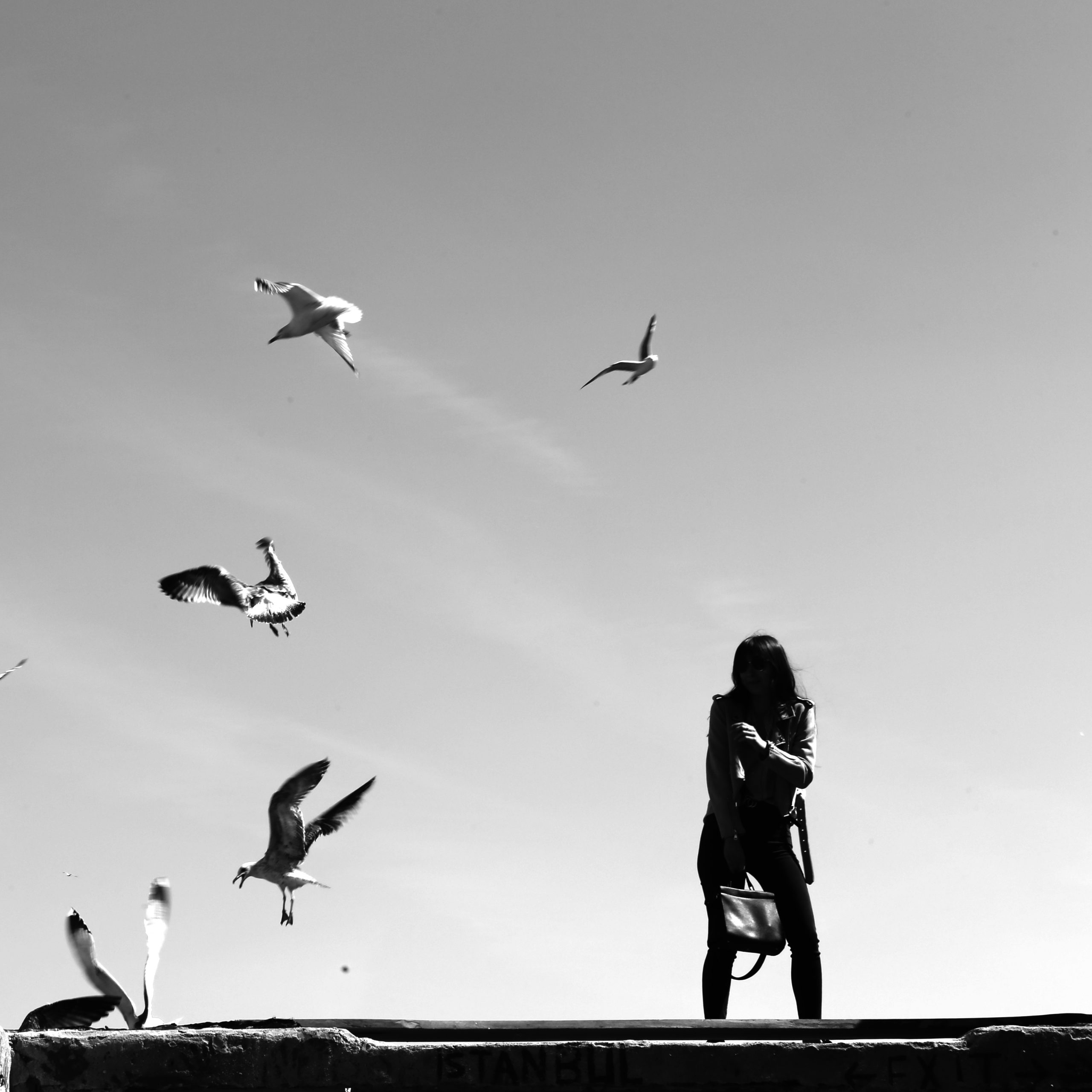 Dance with the seagulls