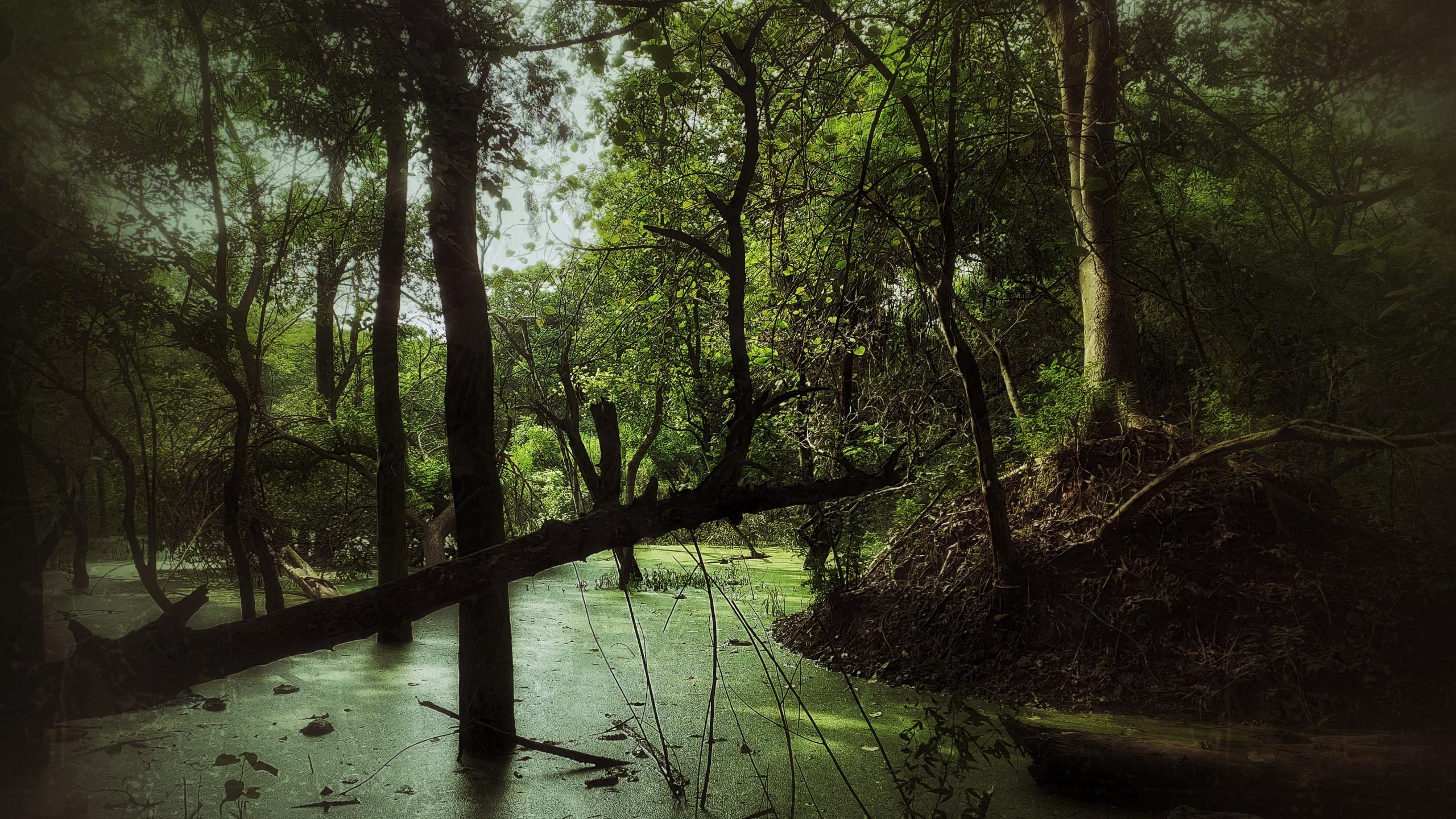 Dark and barren forest
