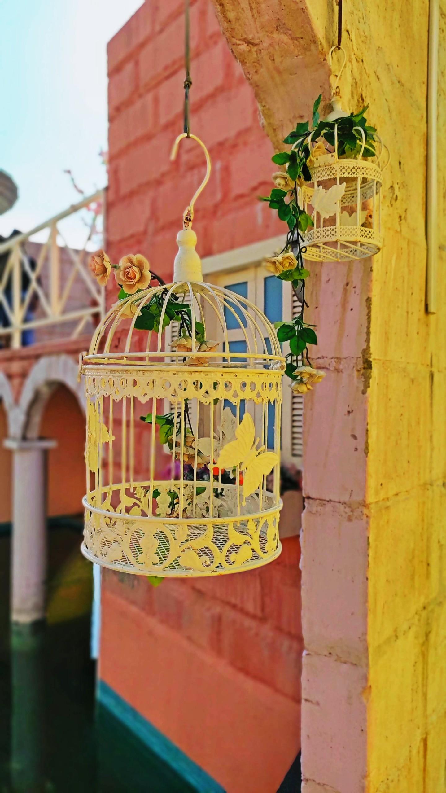 Fancy Bird cage