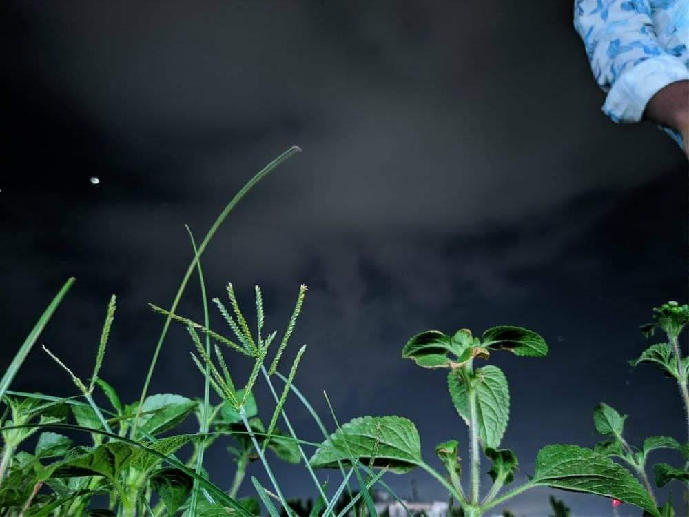 Grasses on Night Sky Background