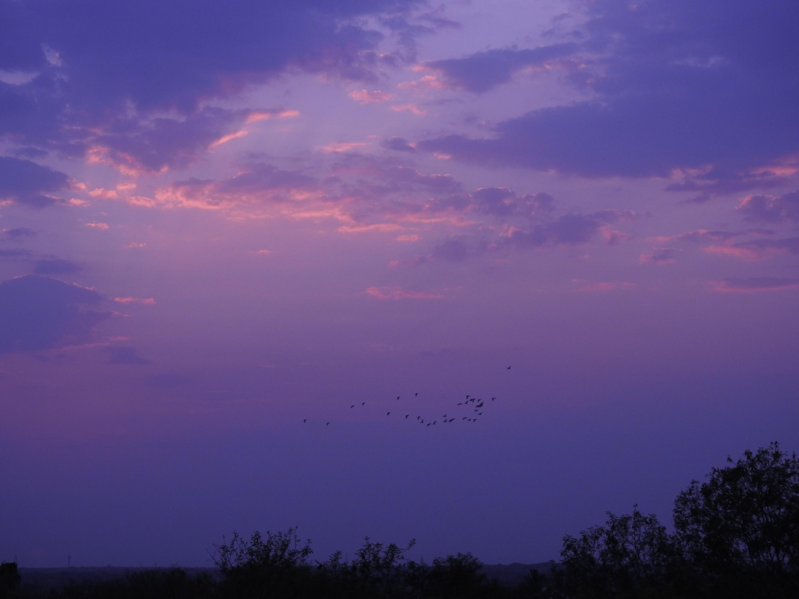 Flock of Birds in Twilight