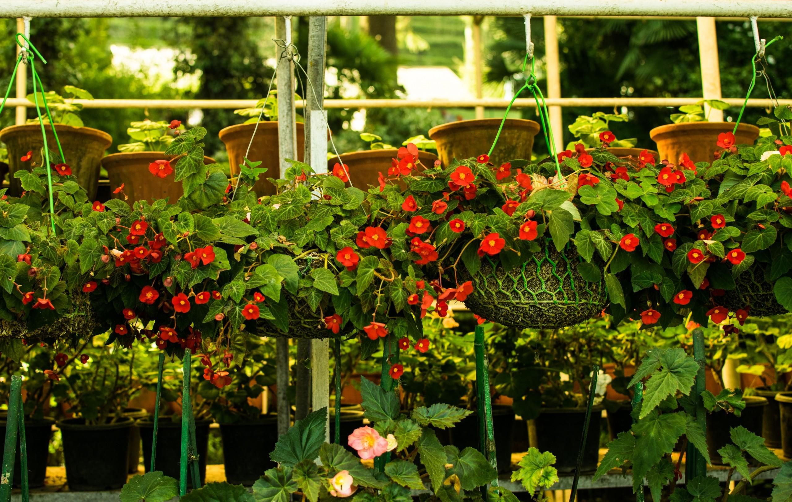 nursery flower pots