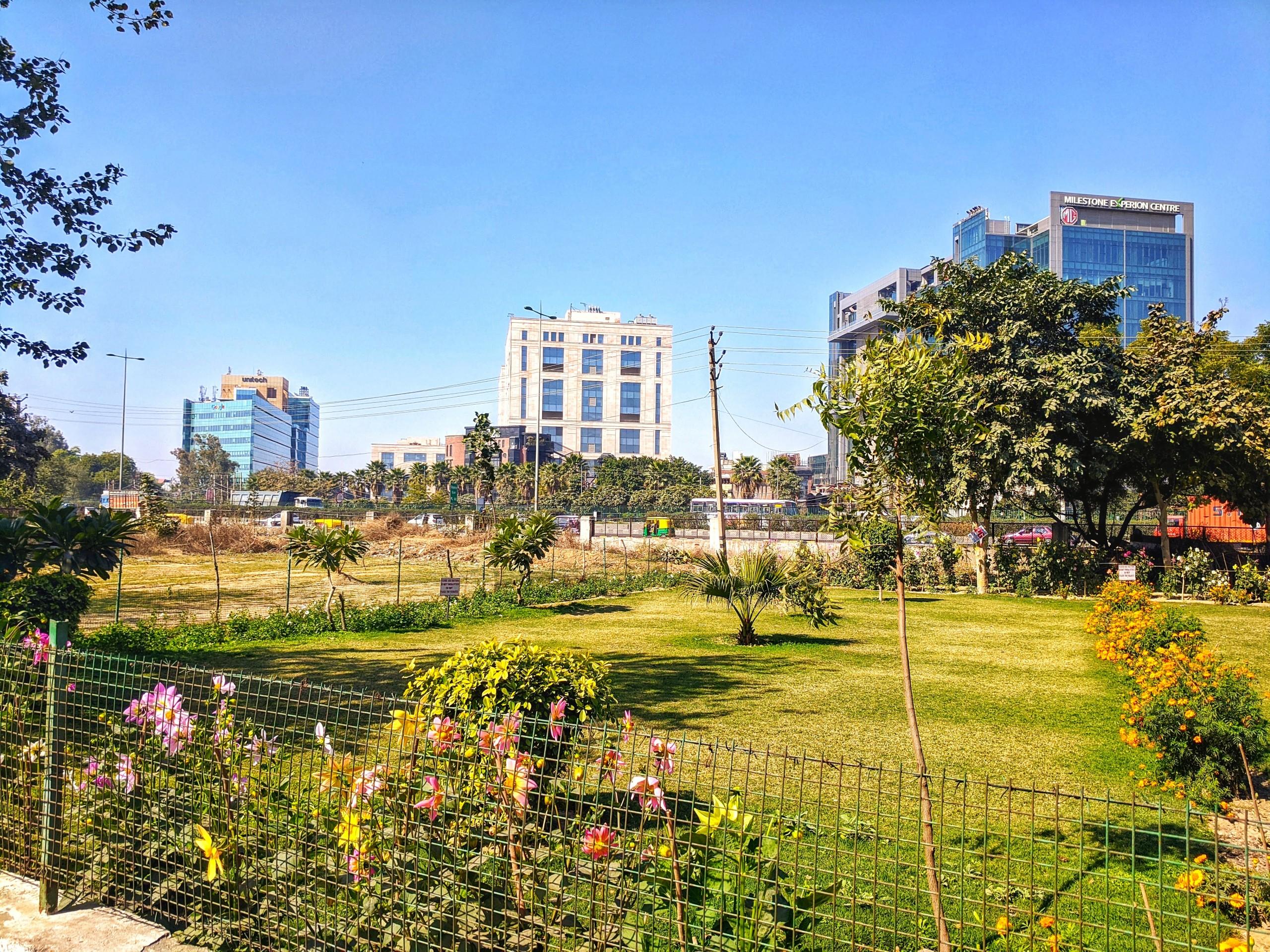 Buildings and Roadside Plants