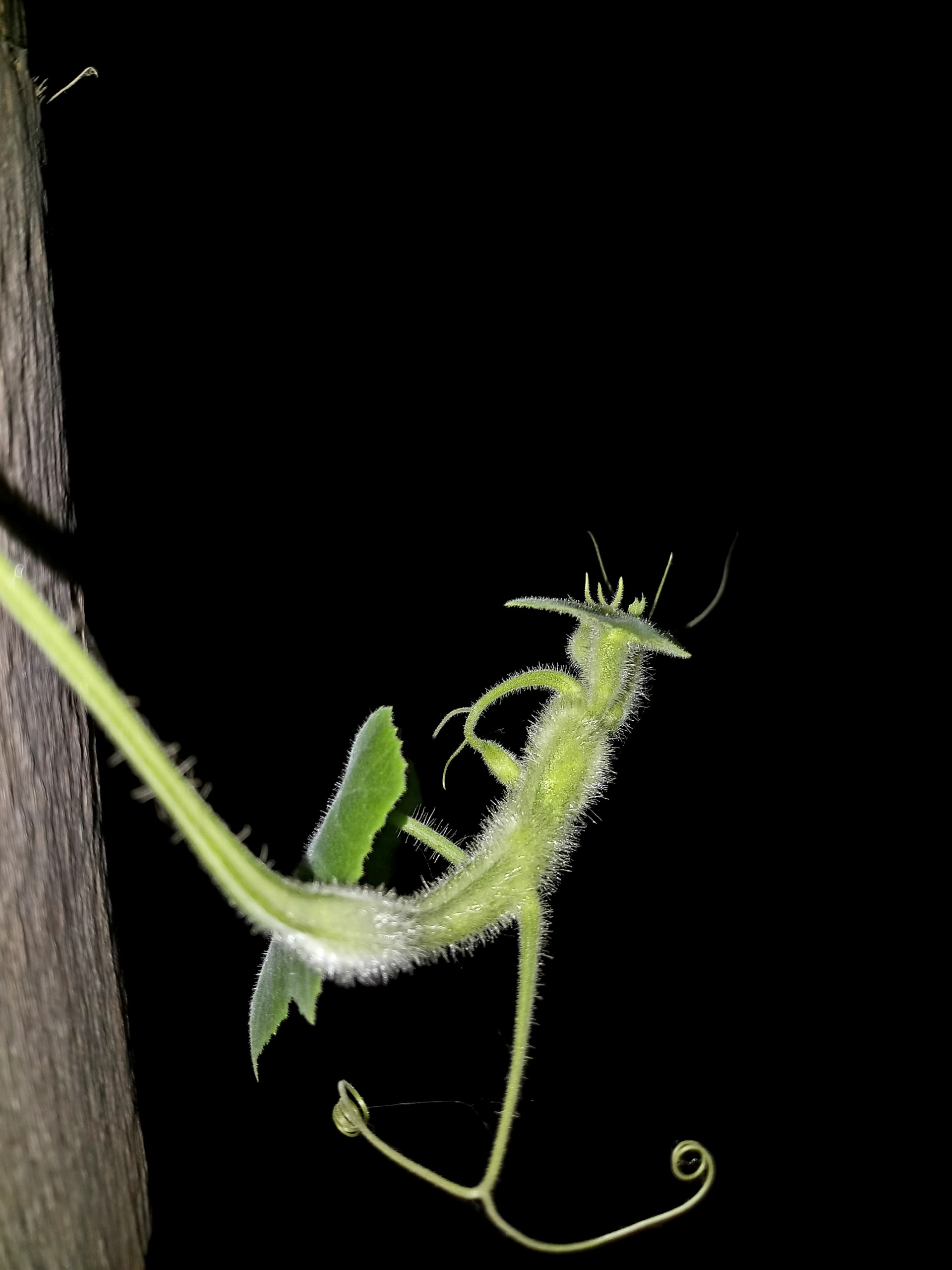 Green Leaf at Night