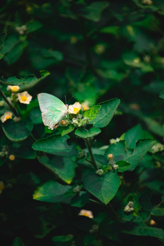 Green Butterfly on a Flower