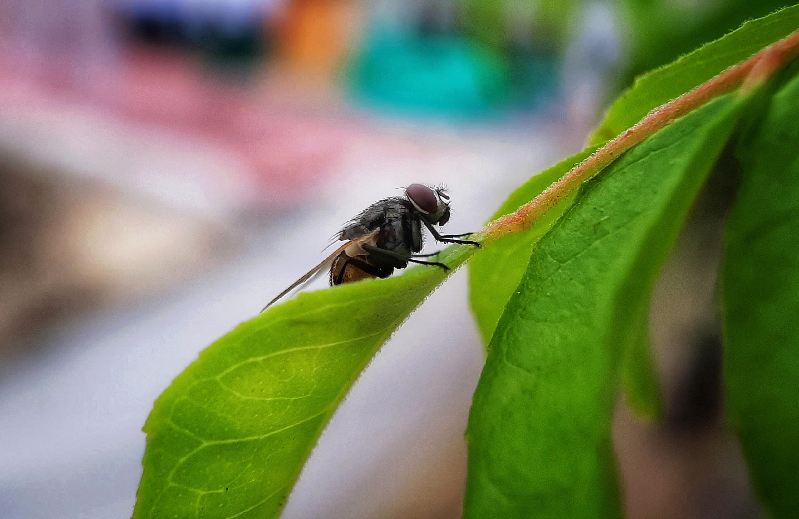 Housefly on Green Leaves