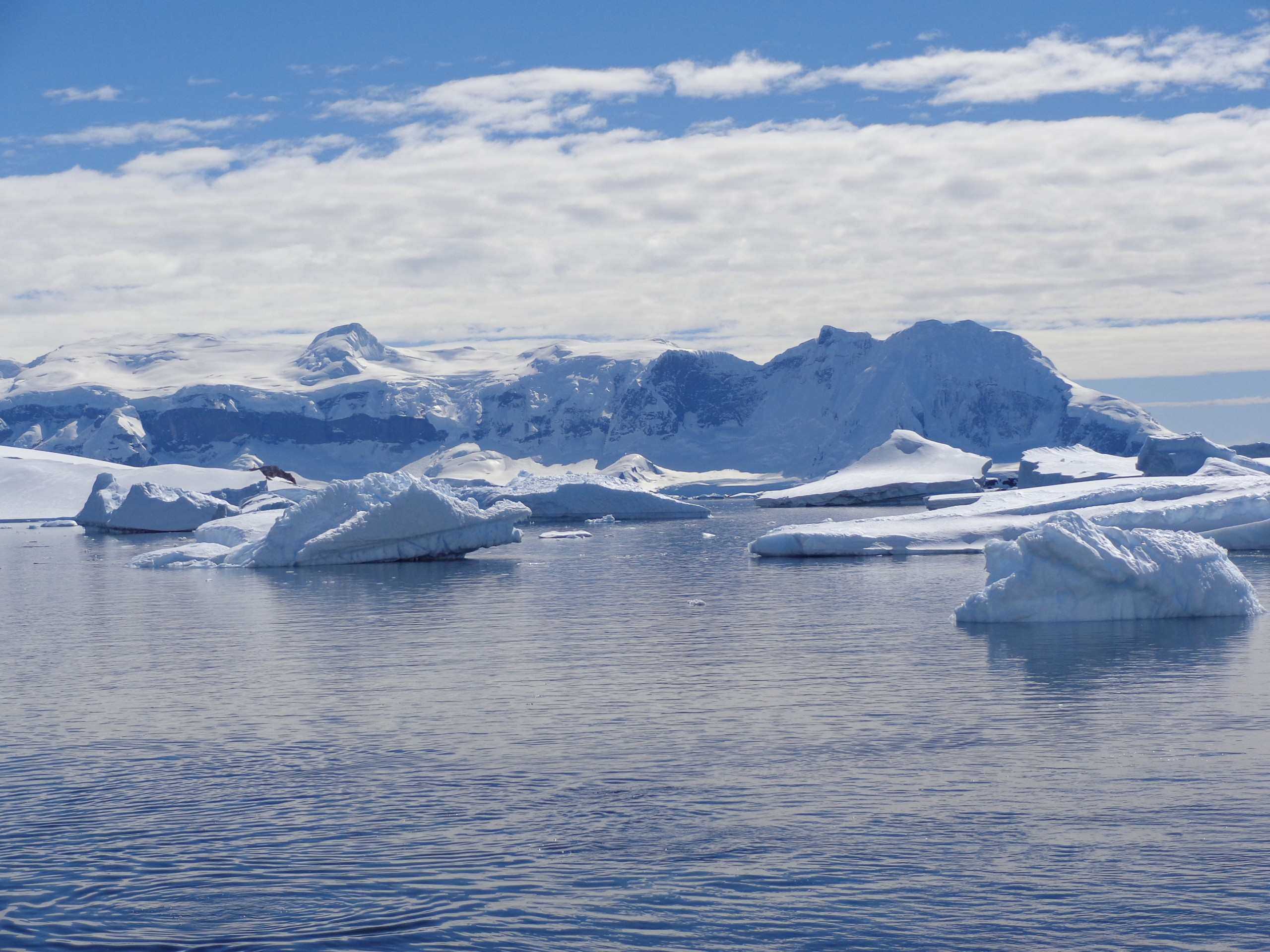 Icebergs in the Arctic Ocean