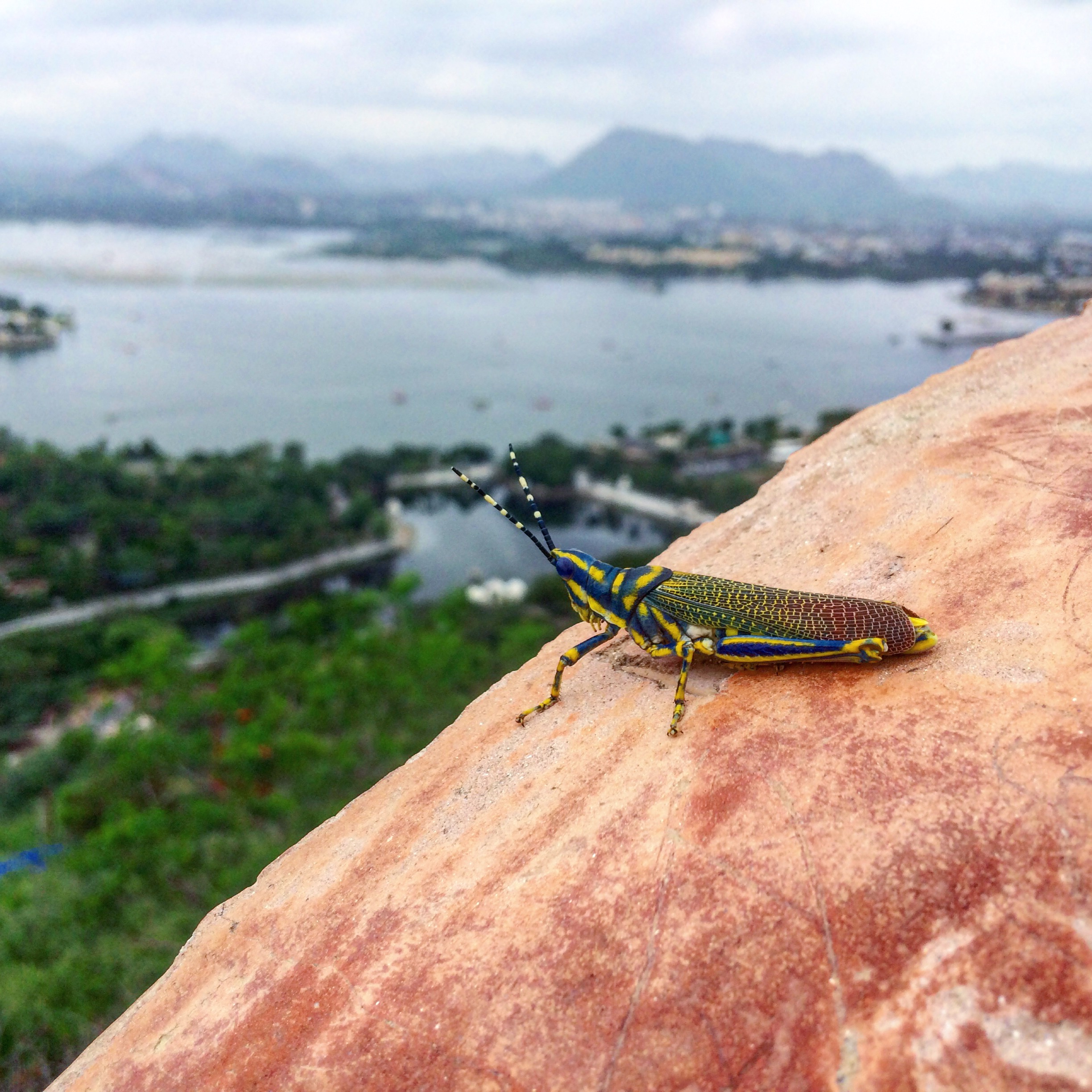 Insect Looking over a City