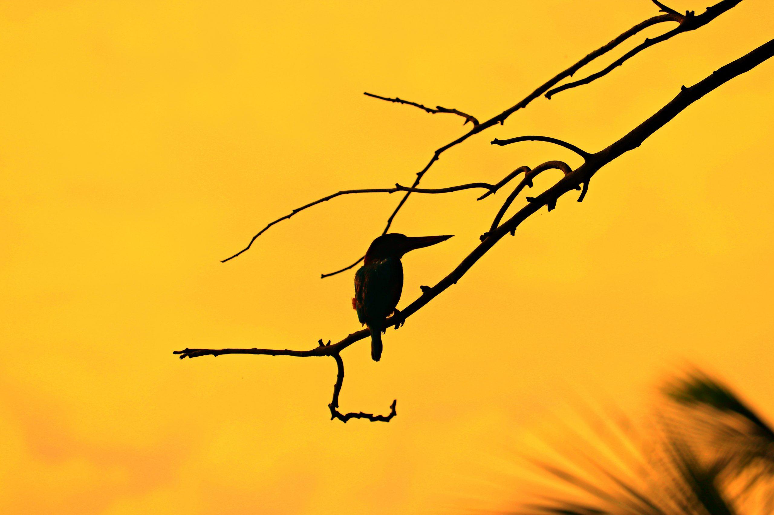 Kingfisher Bird on tree branch