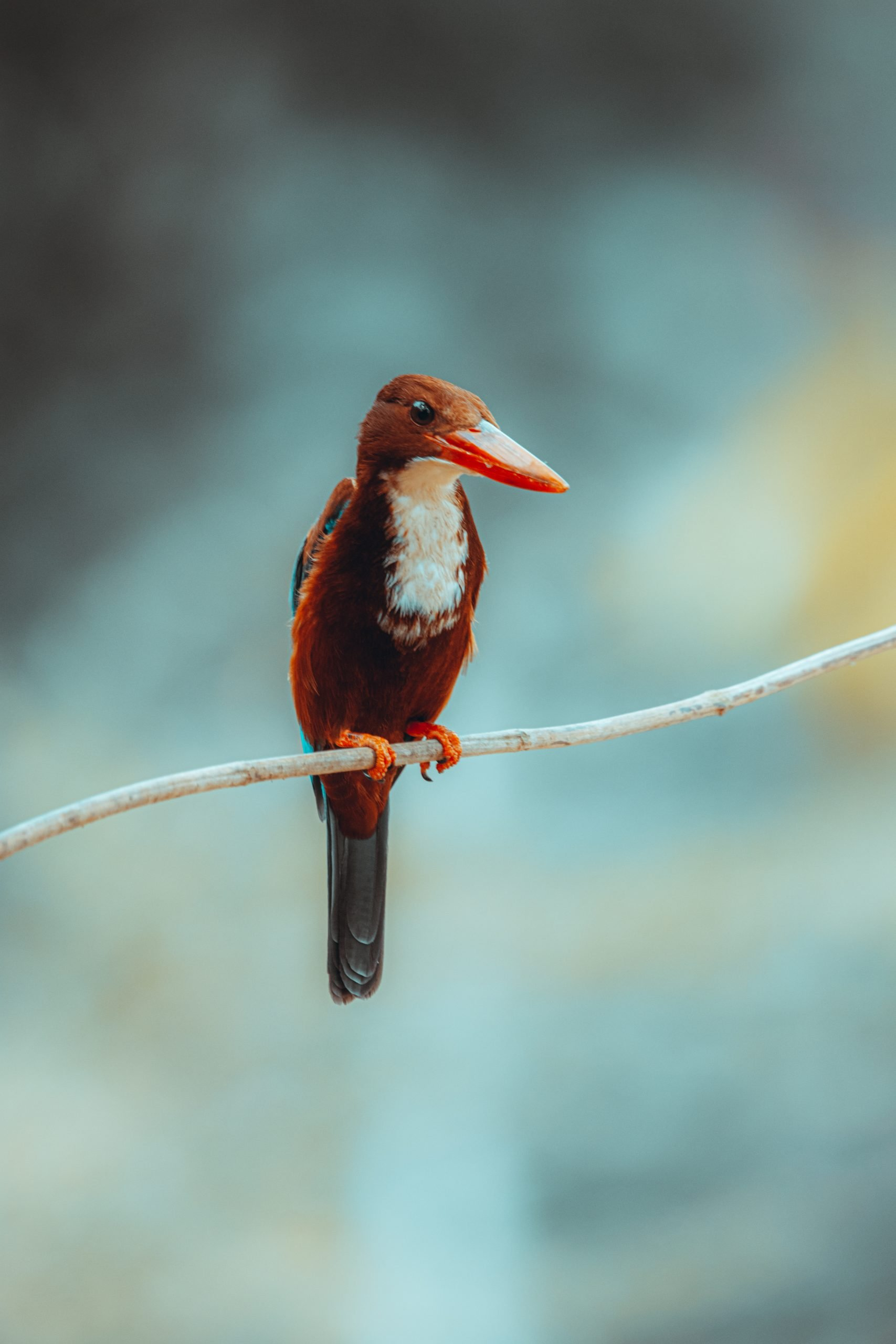 Kingfisher On a Tree