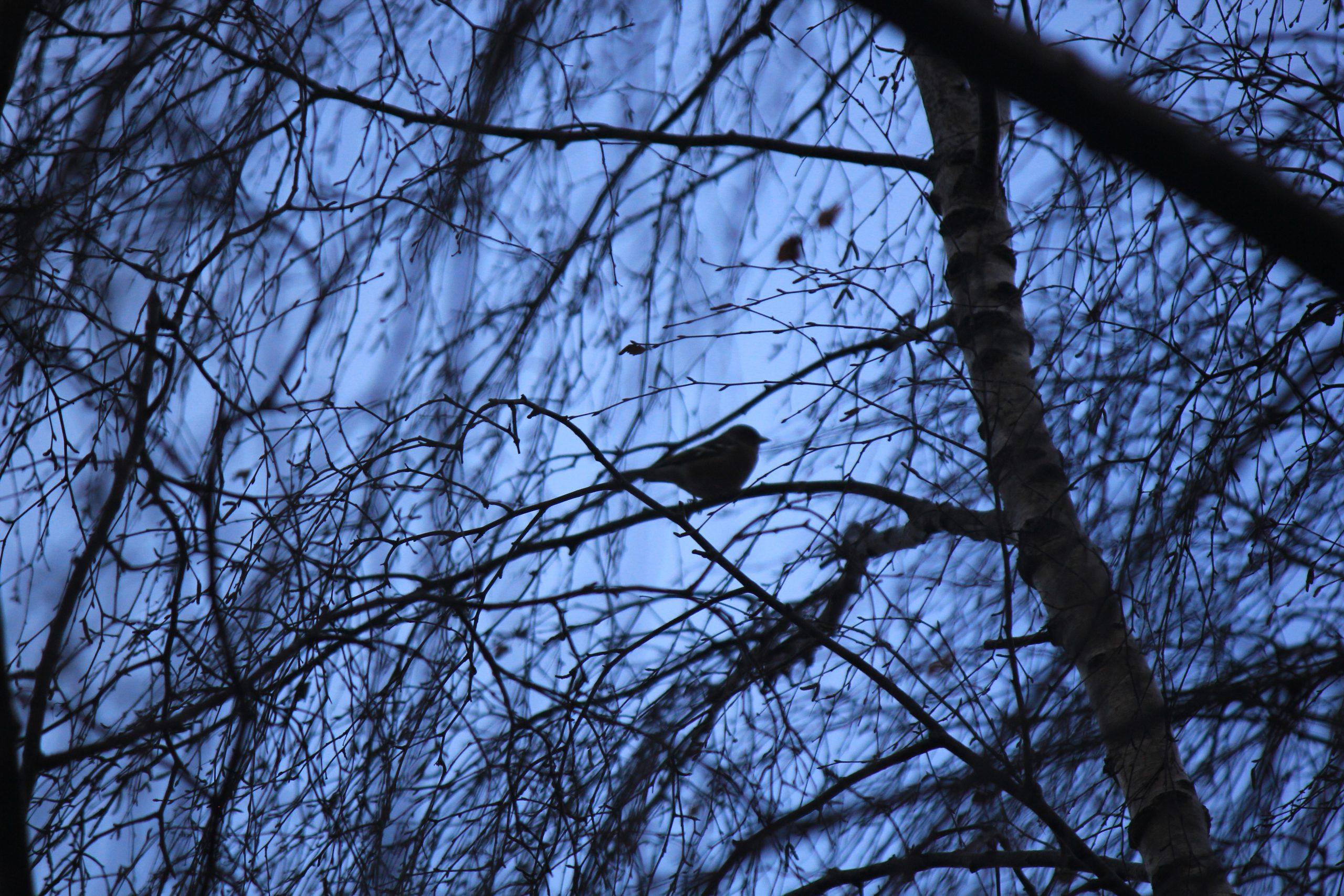 Lone Sparrow at Dusk