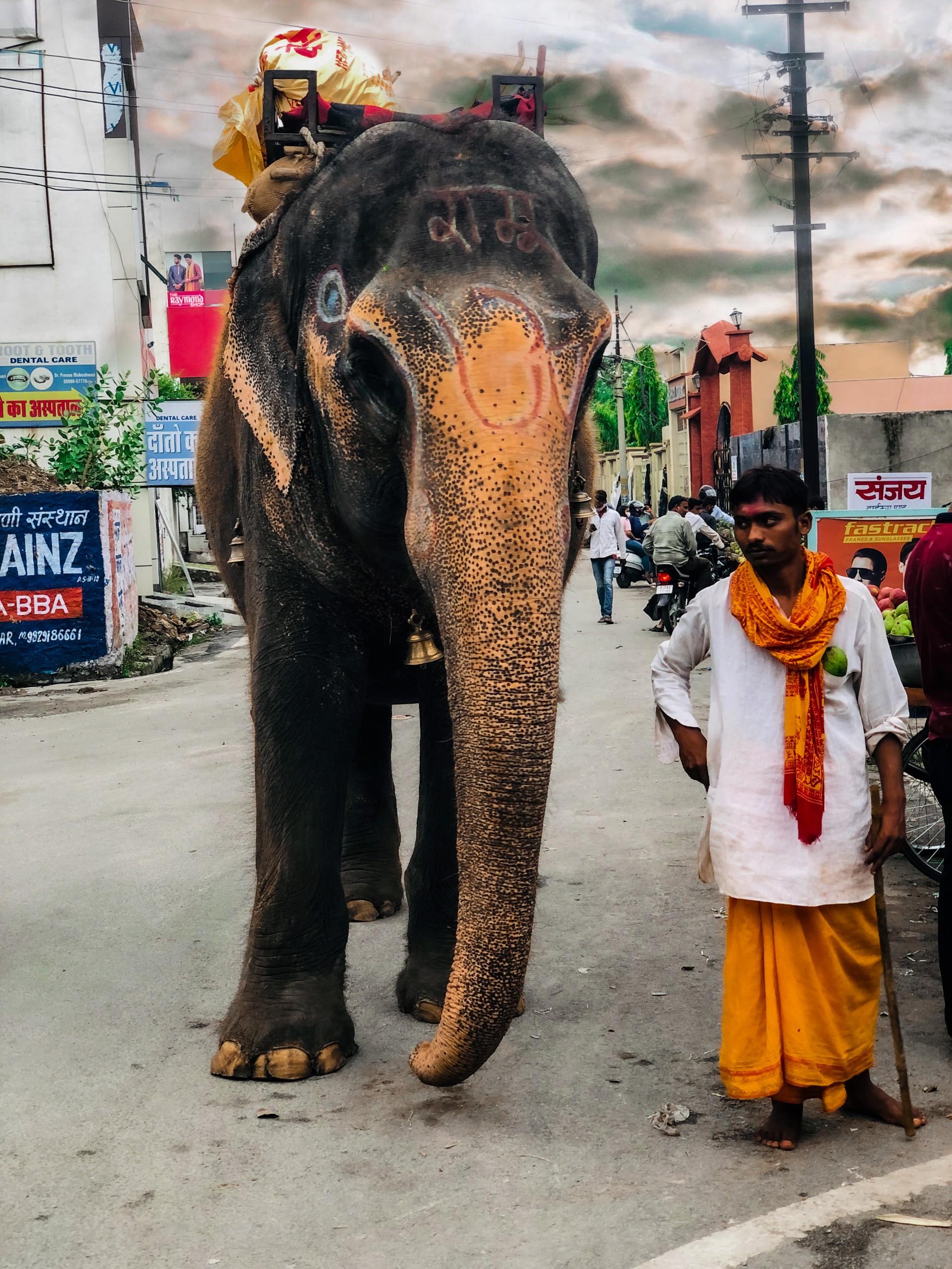 elephant ride in india animal cruelty