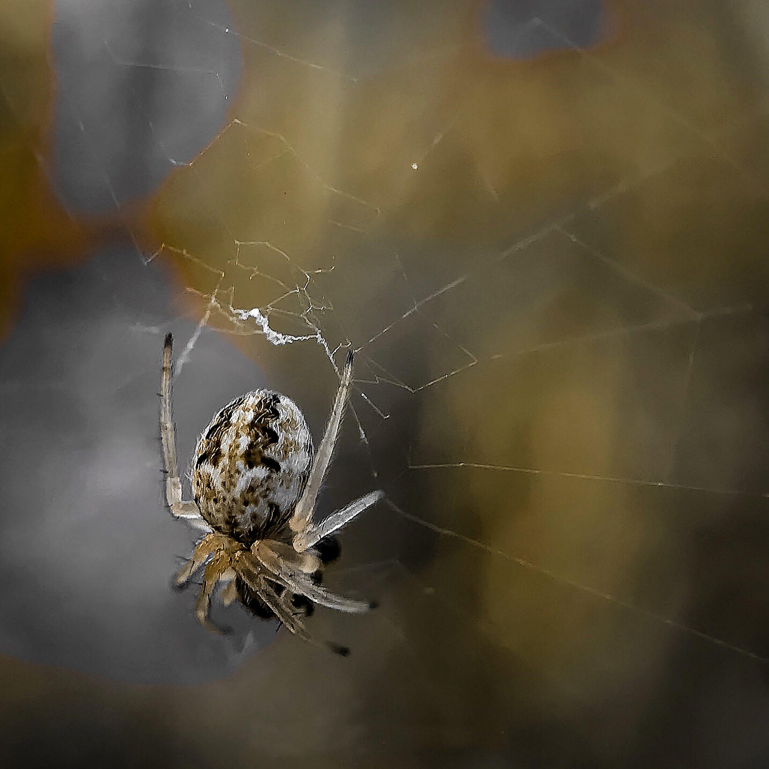 Mini Spider