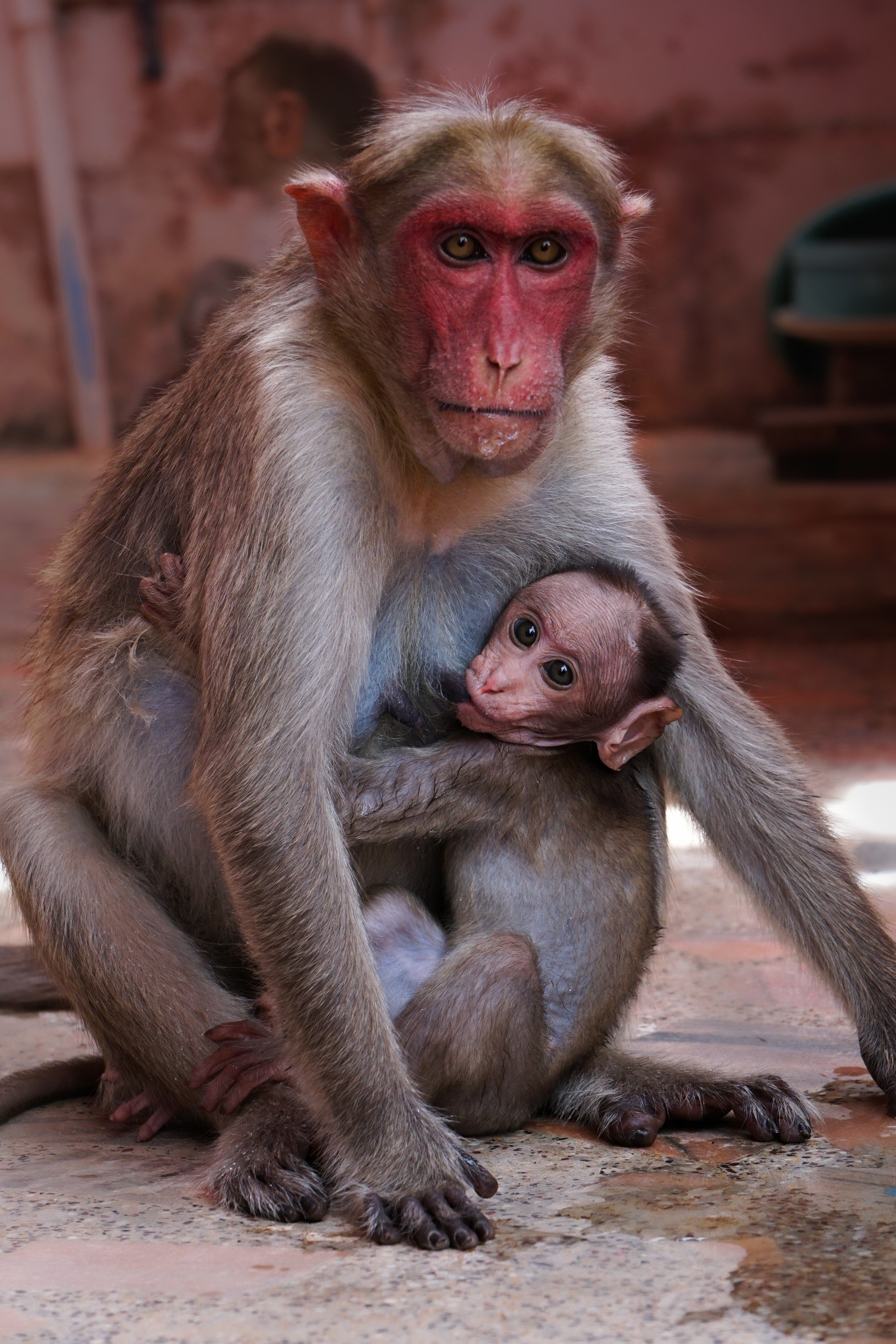 mother monkey with child