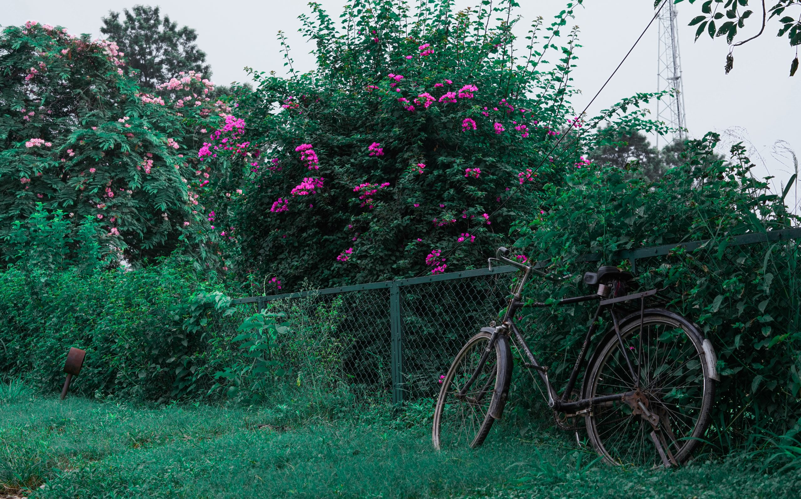 Bicyle Parked in the Garden