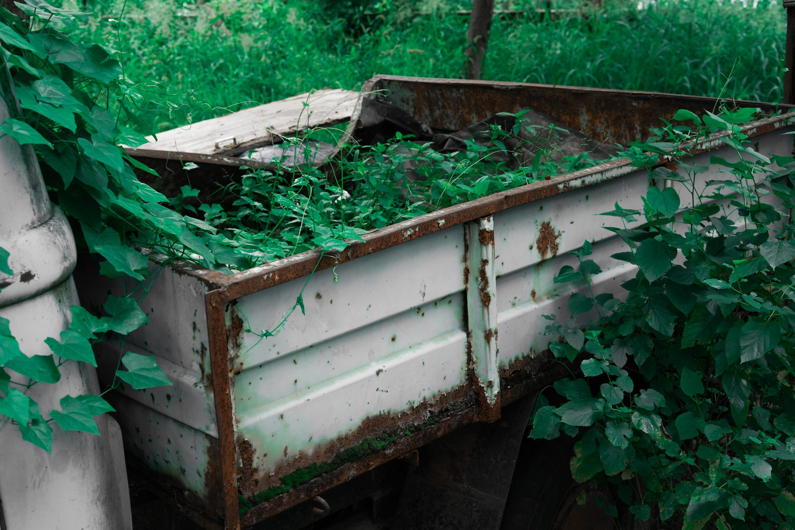 Nature in damage car