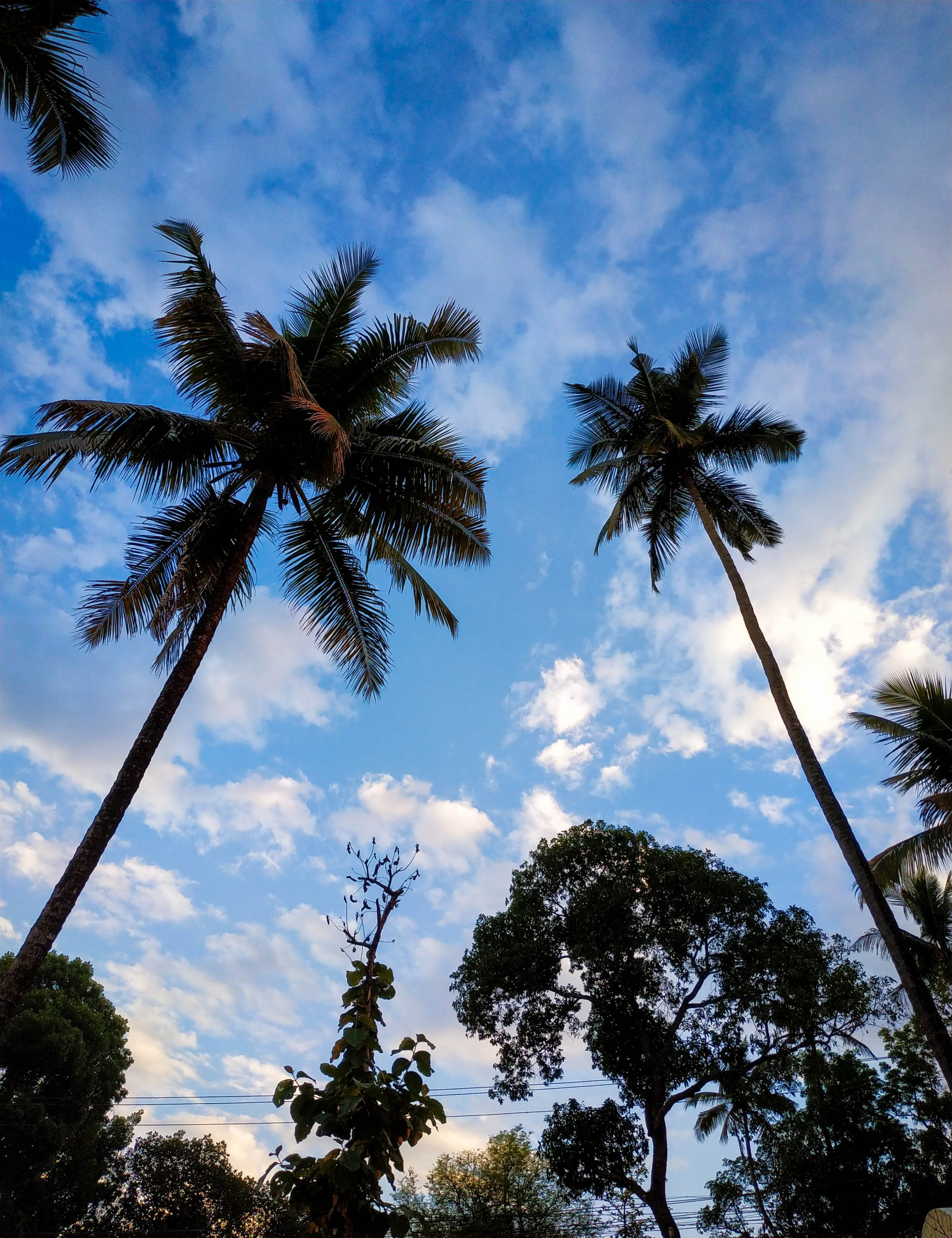 Palm Trees with Sky View