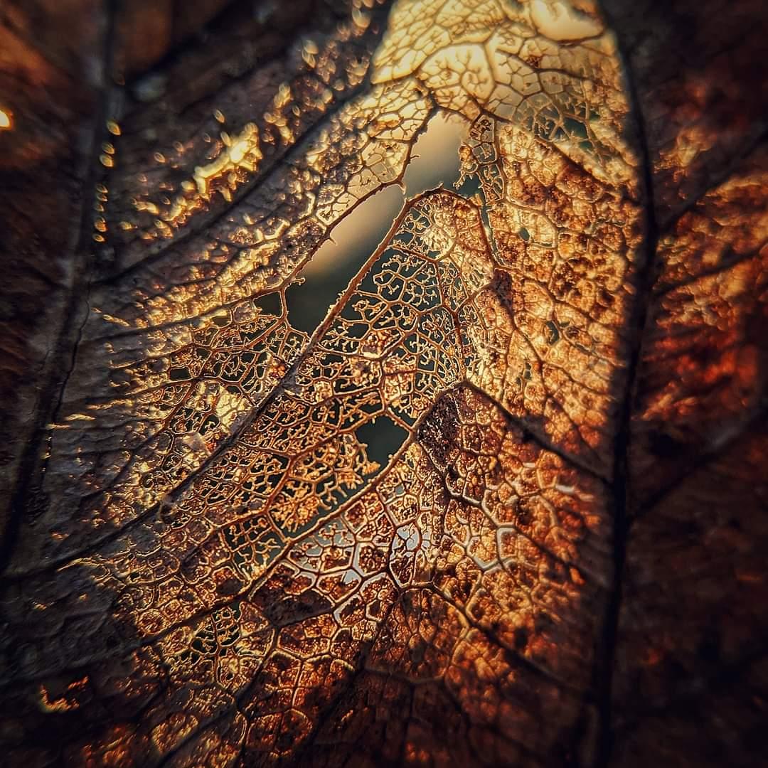 Pattern on a Dead Leaf