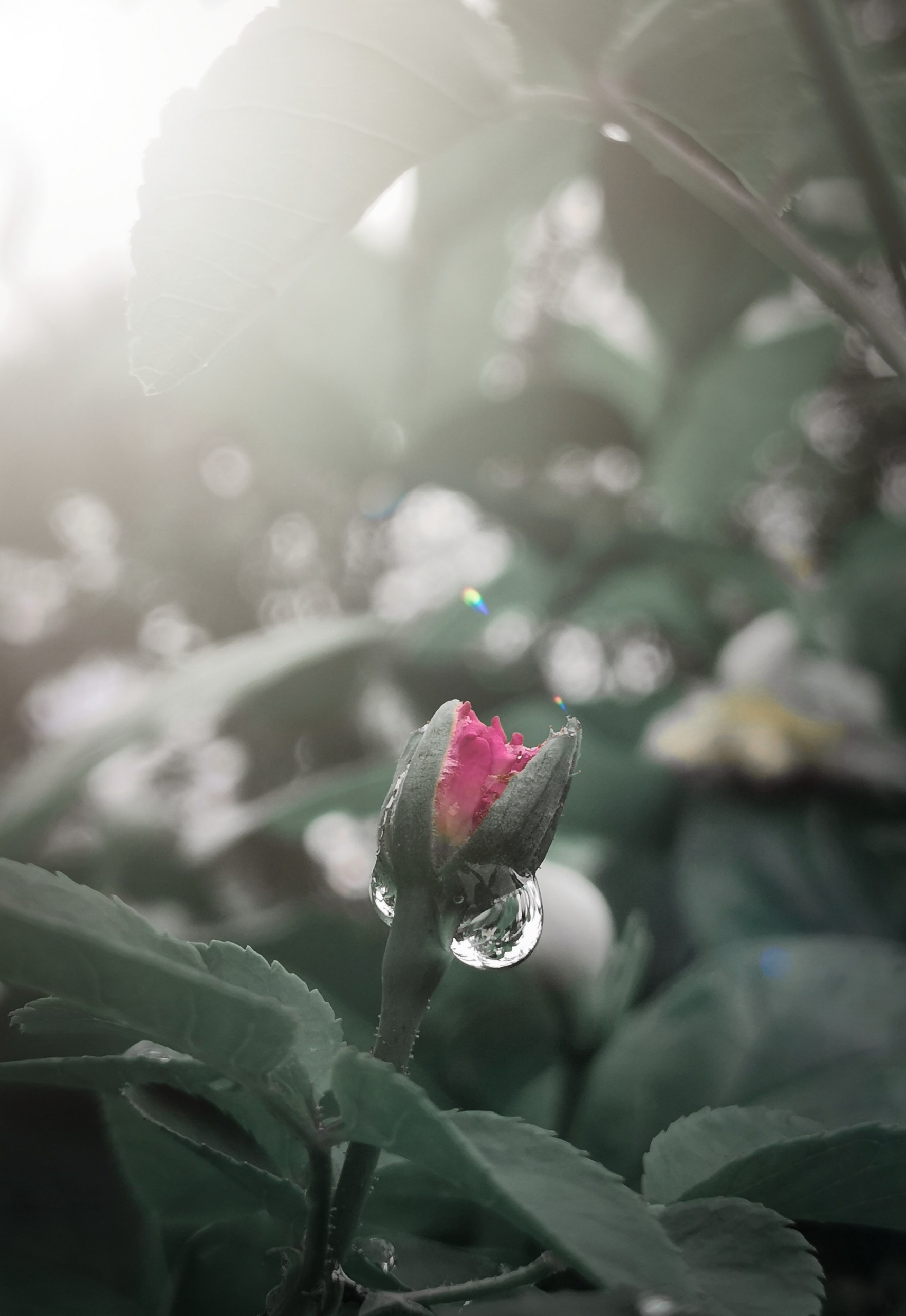 free photo of a flower