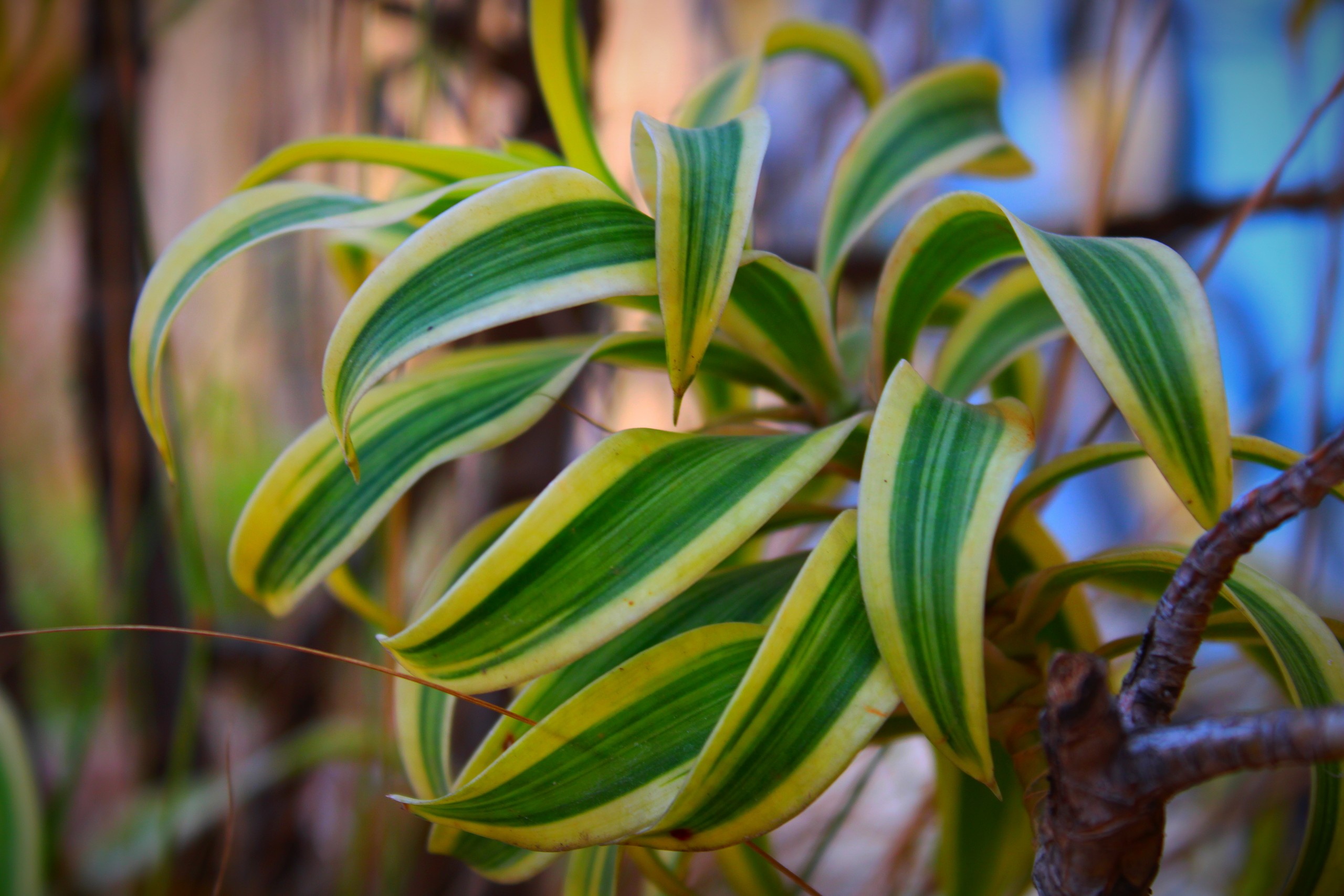 Plant leaves in a garden
