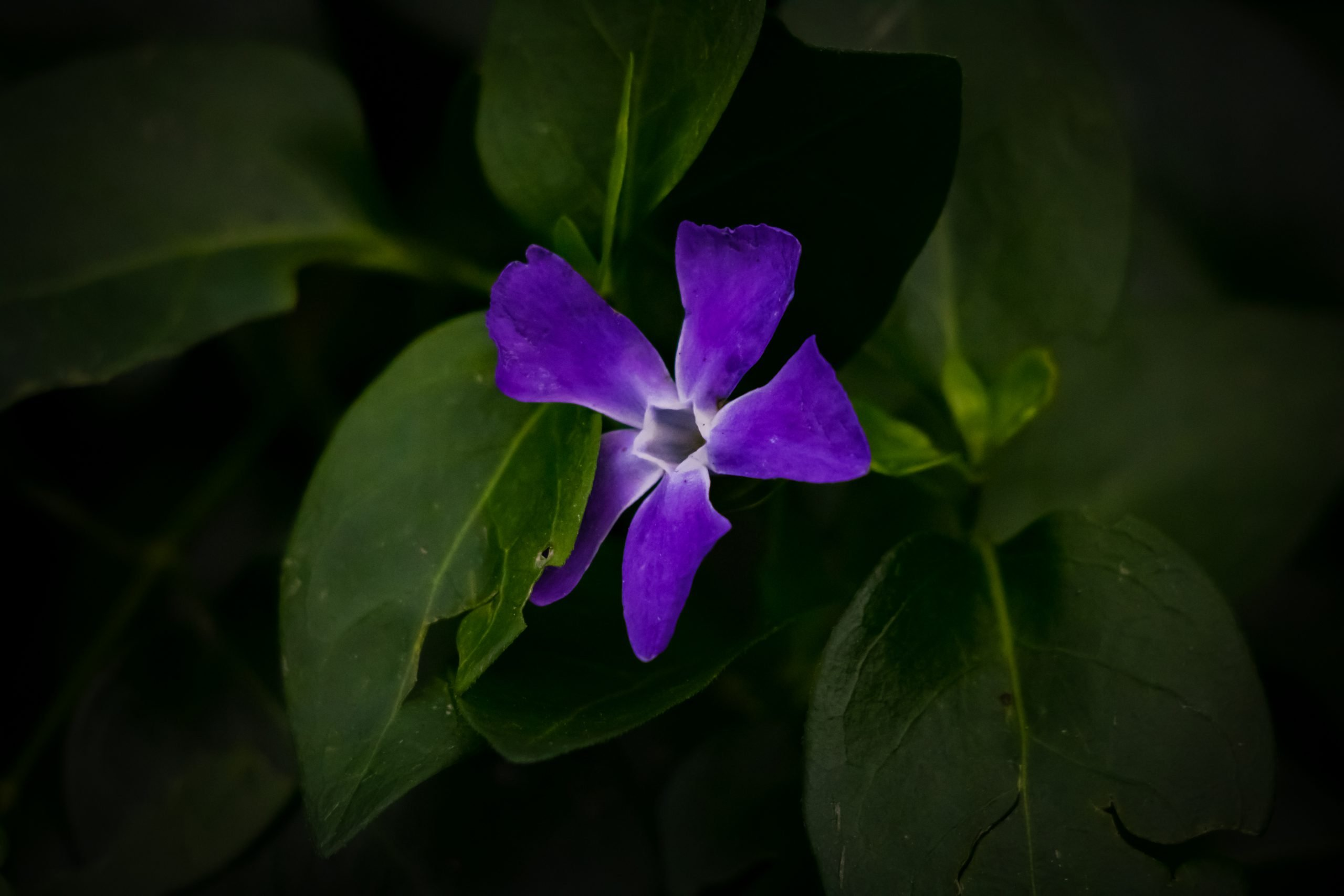 Purple Flower on Focus