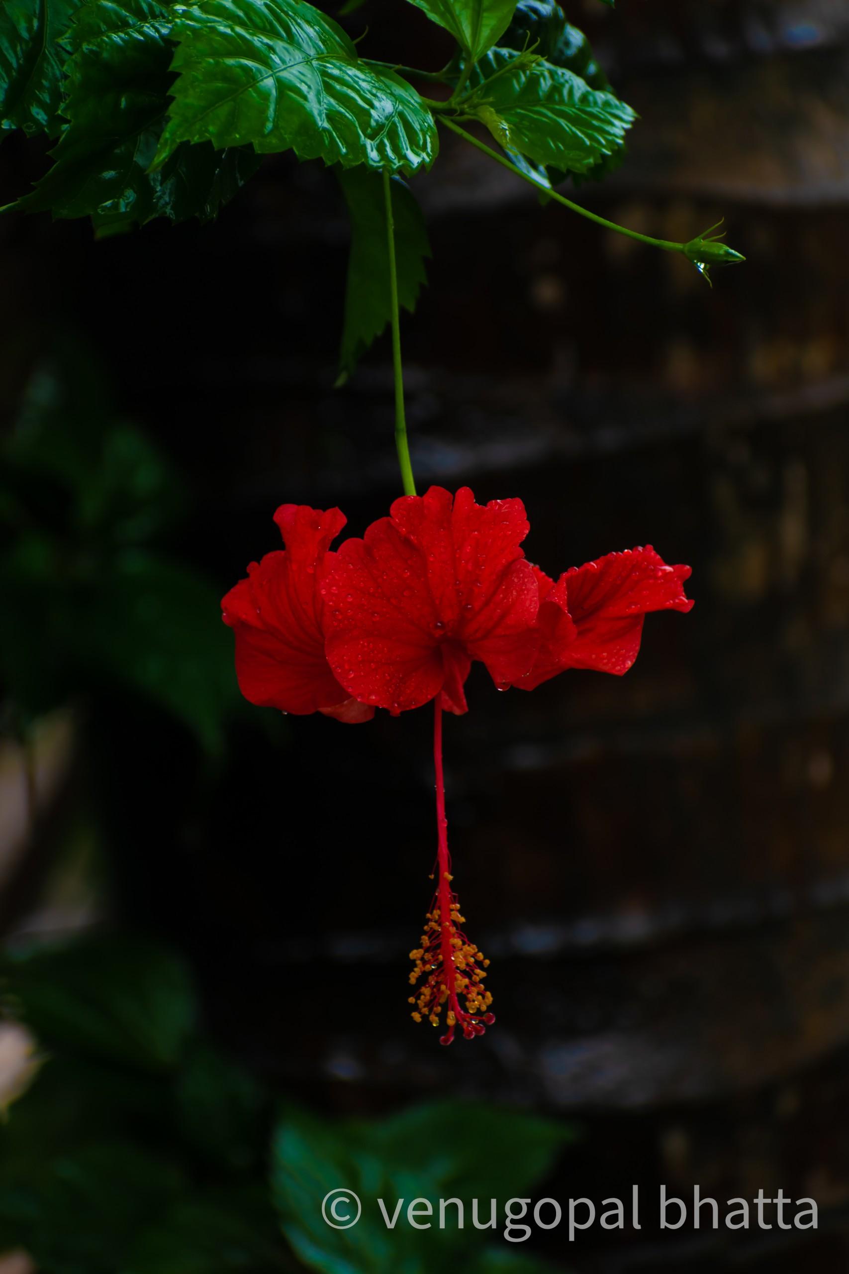 Red Flower on Focus
