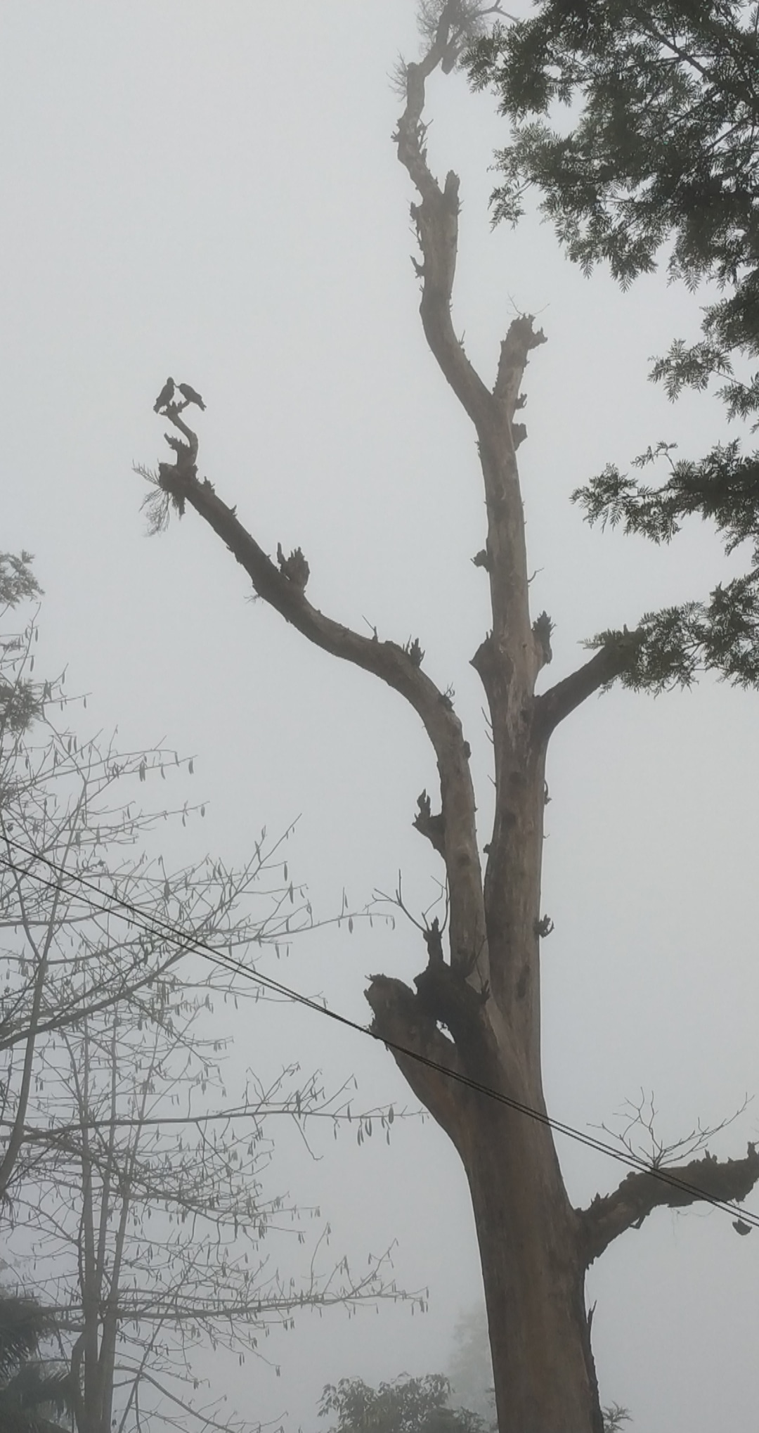 Birds perched on a tree